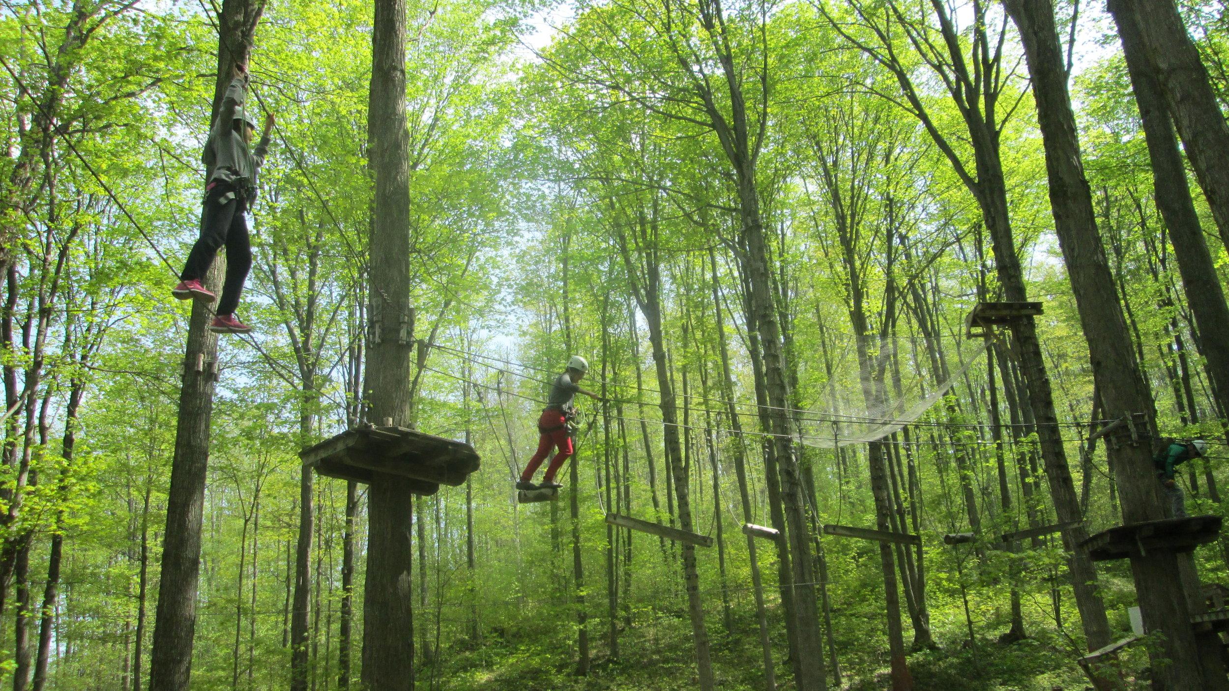 Treetop Trekking 2016.jpg