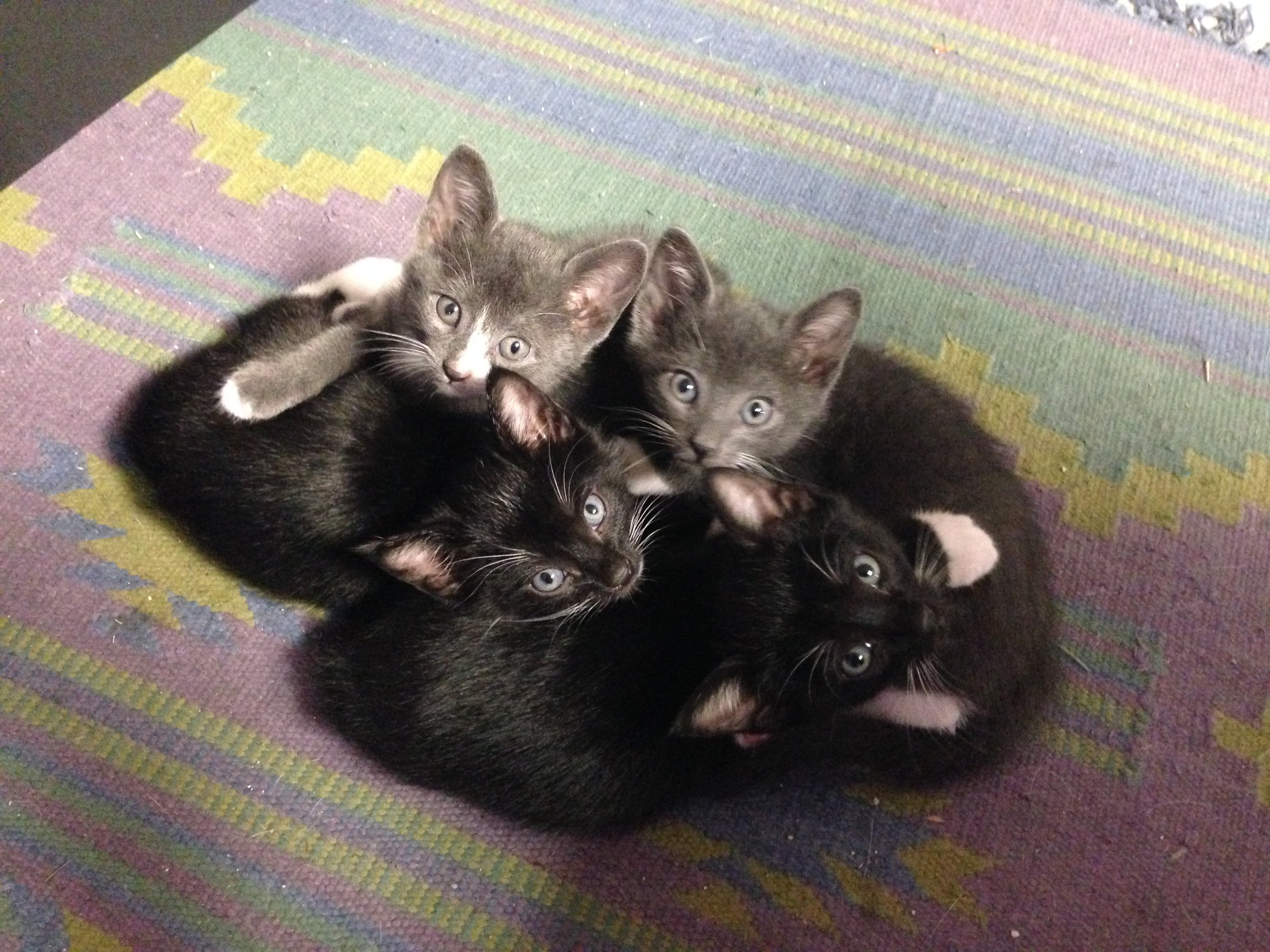 PowerSport office kittens need adopting, as of 10/10/16 still. Any takers? Let me know!
