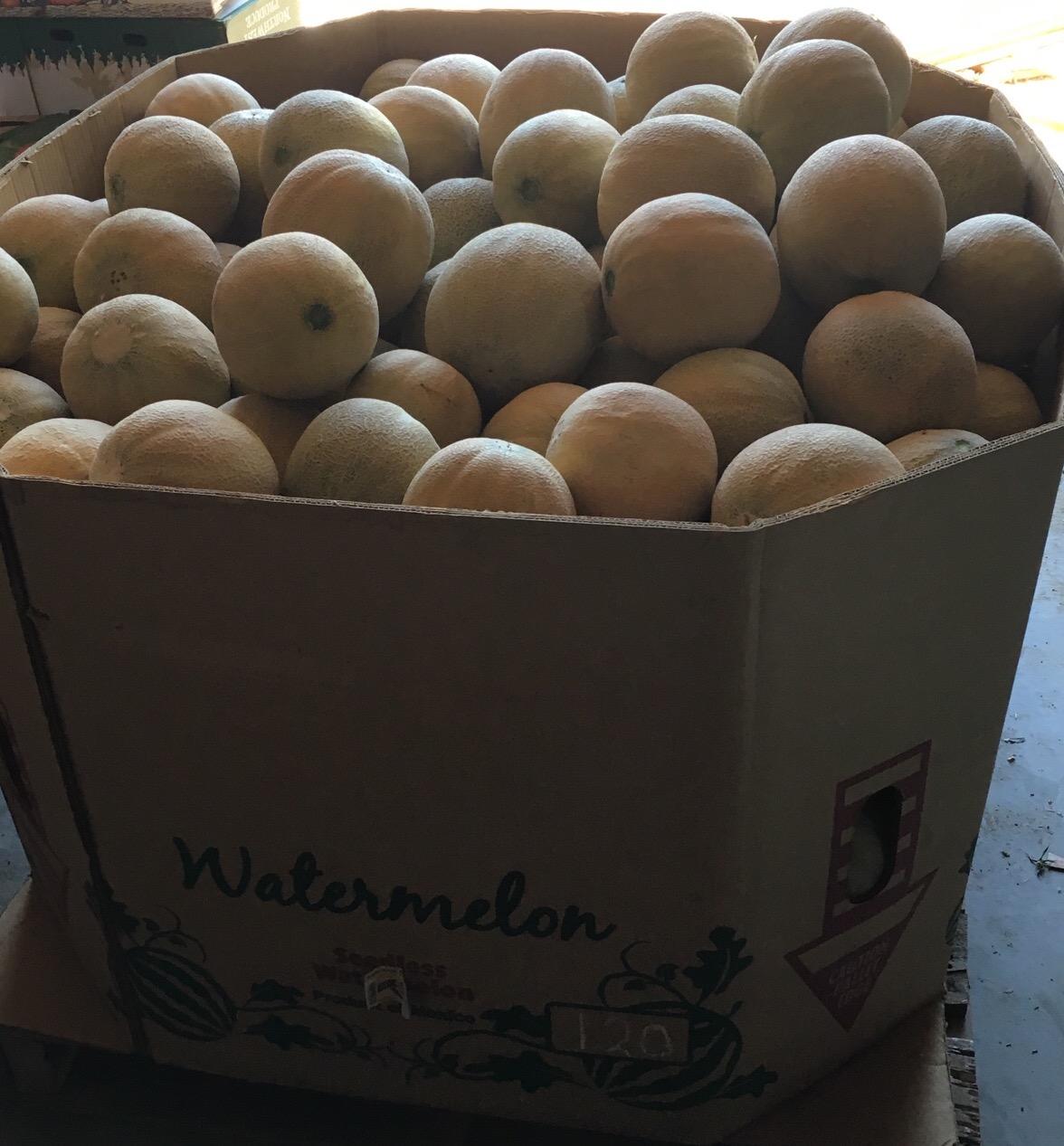 Ambrosia Melons.jpg