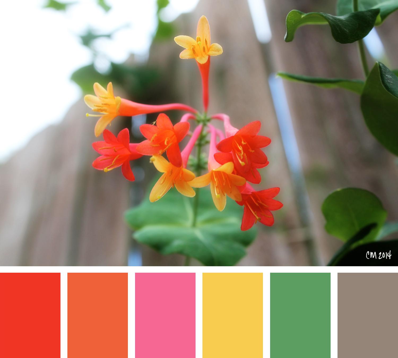 8.12.14-ColorInspiration.jpg