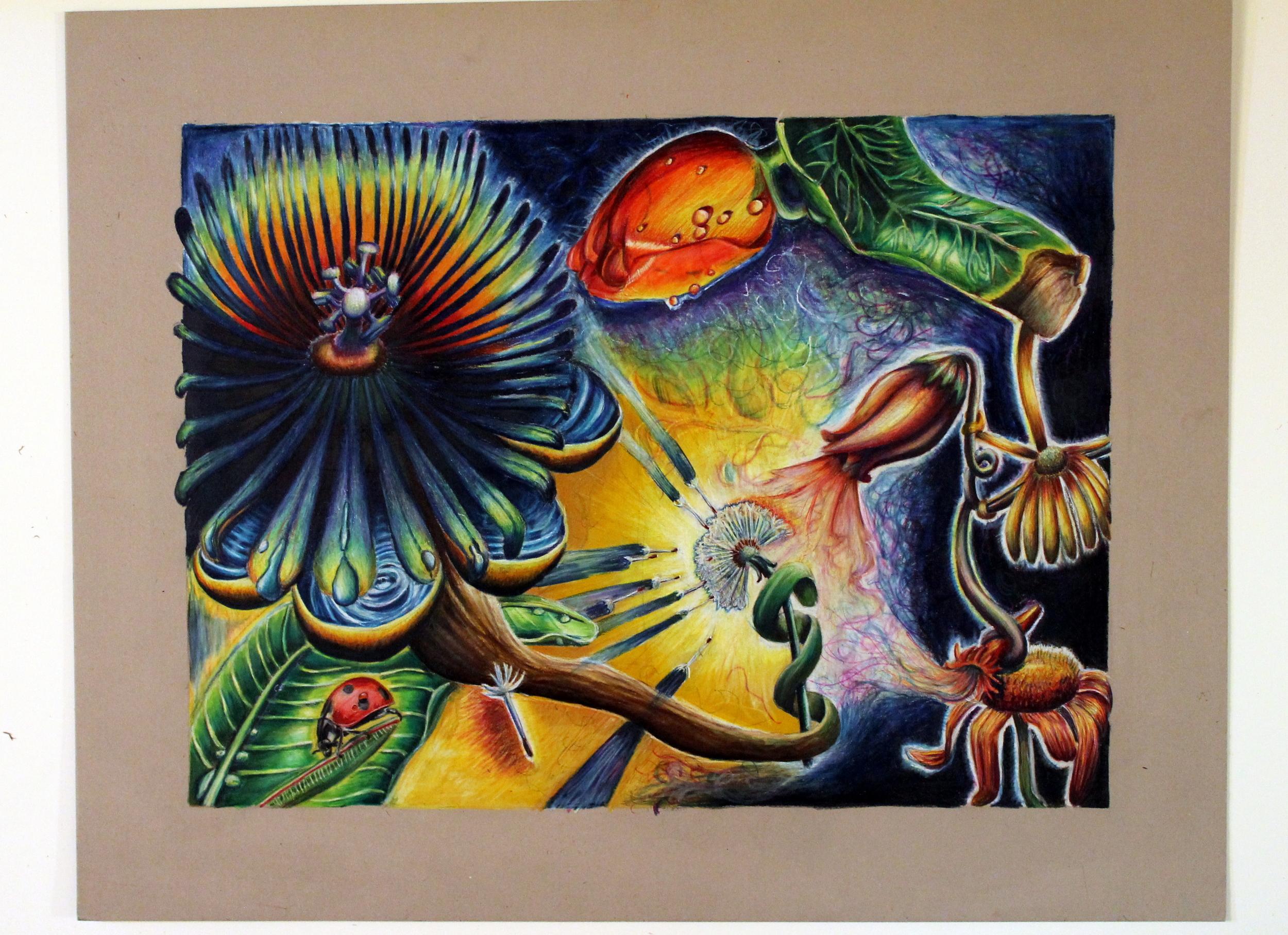 Floral Exploration (Colored pencil), 2009