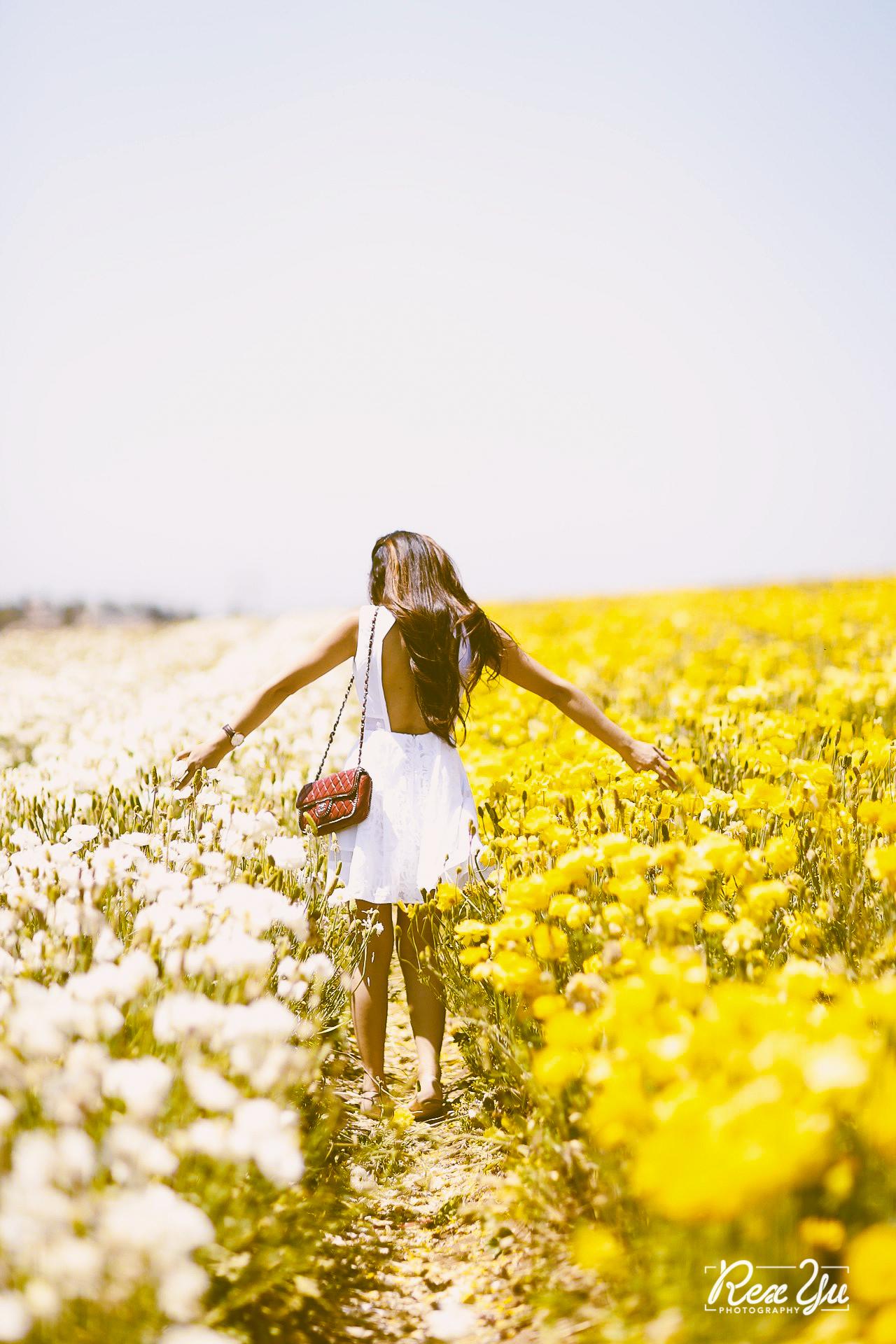 The Flower Fields of Carlsbad (23 of 58).jpg