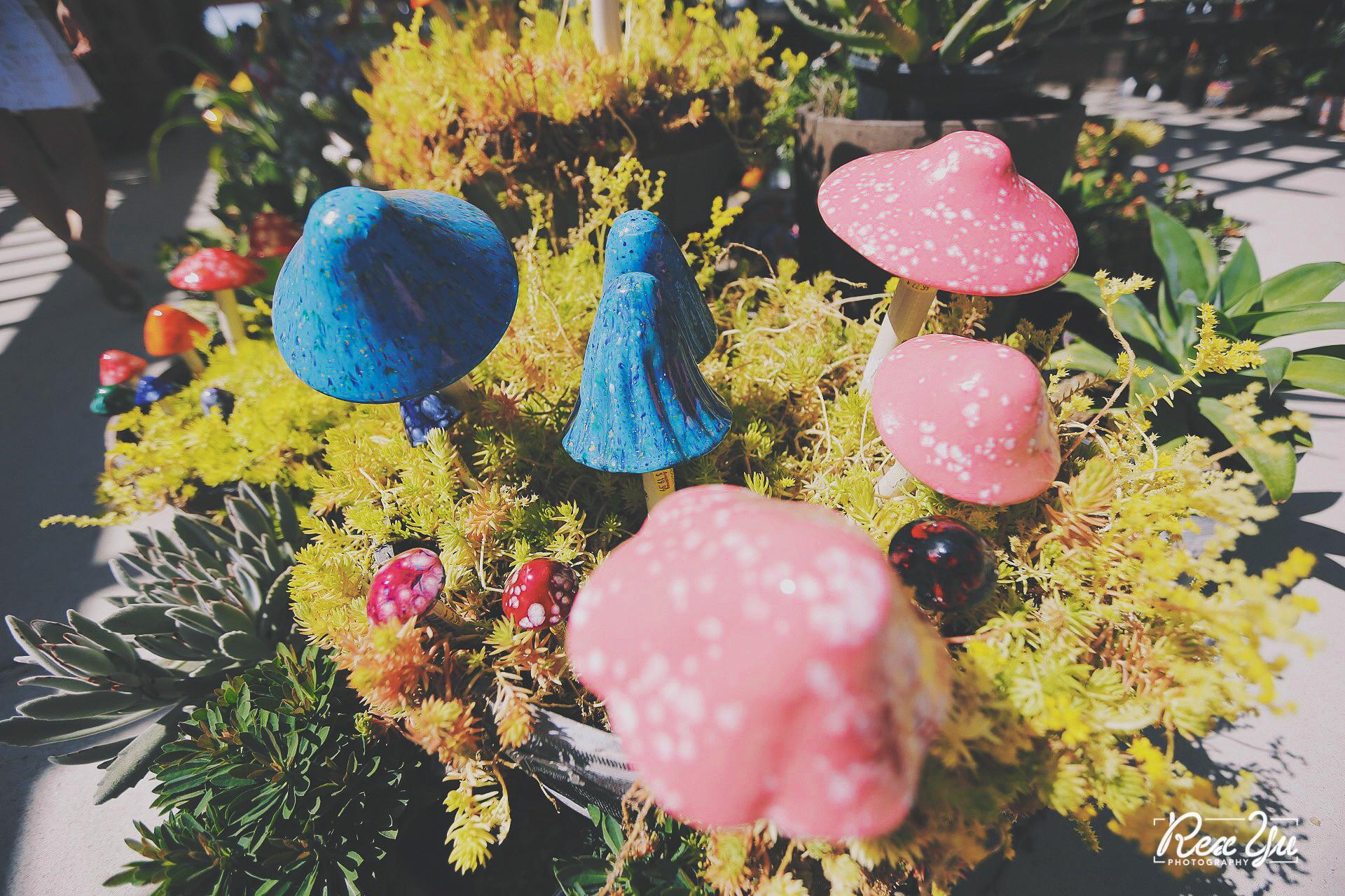 The Flower Fields of Carlsbad (53 of 58).jpg