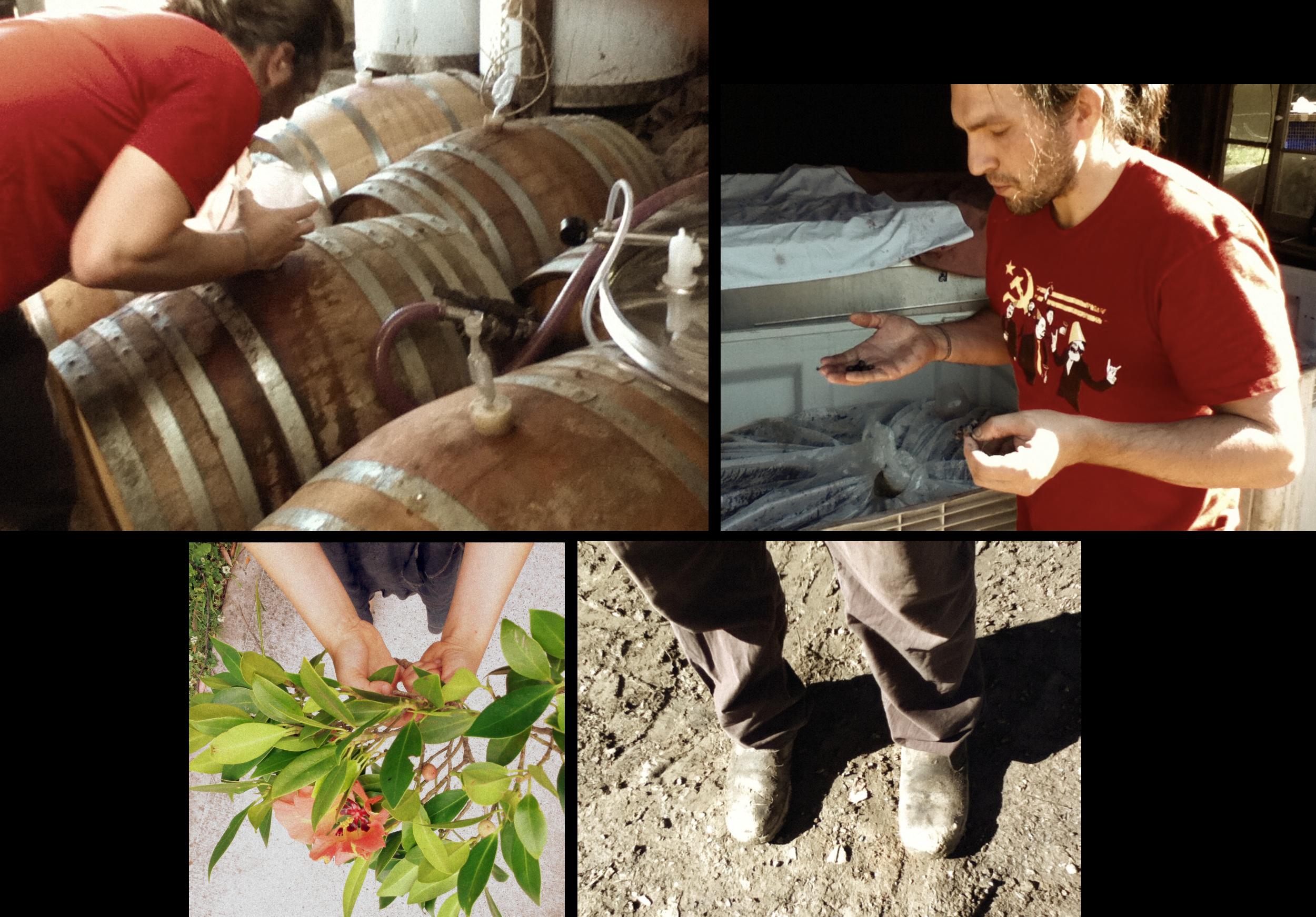 The Other Right Wines - Winemaker Alex Schulkin