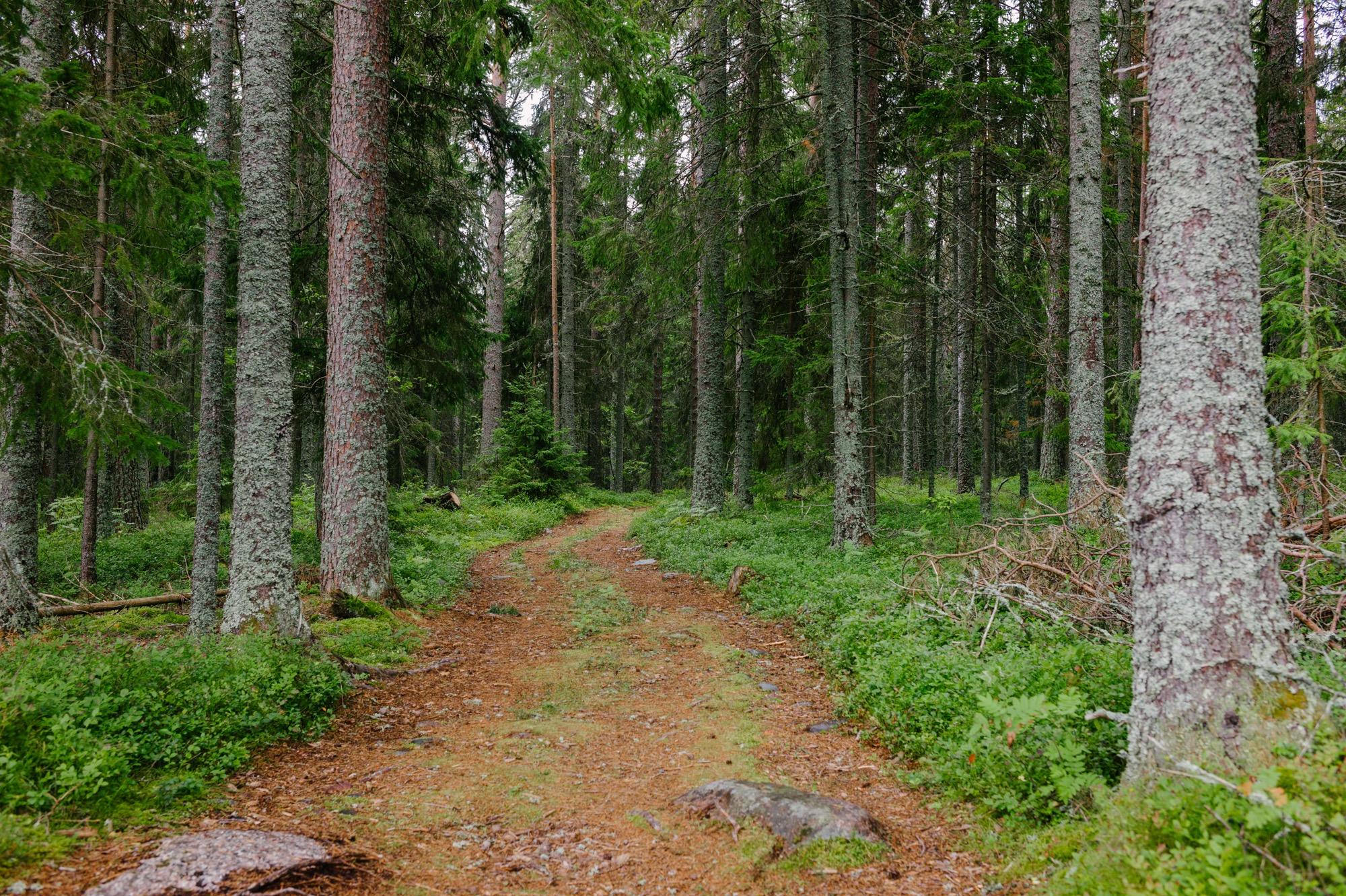 Sweden August 2015-19.jpg
