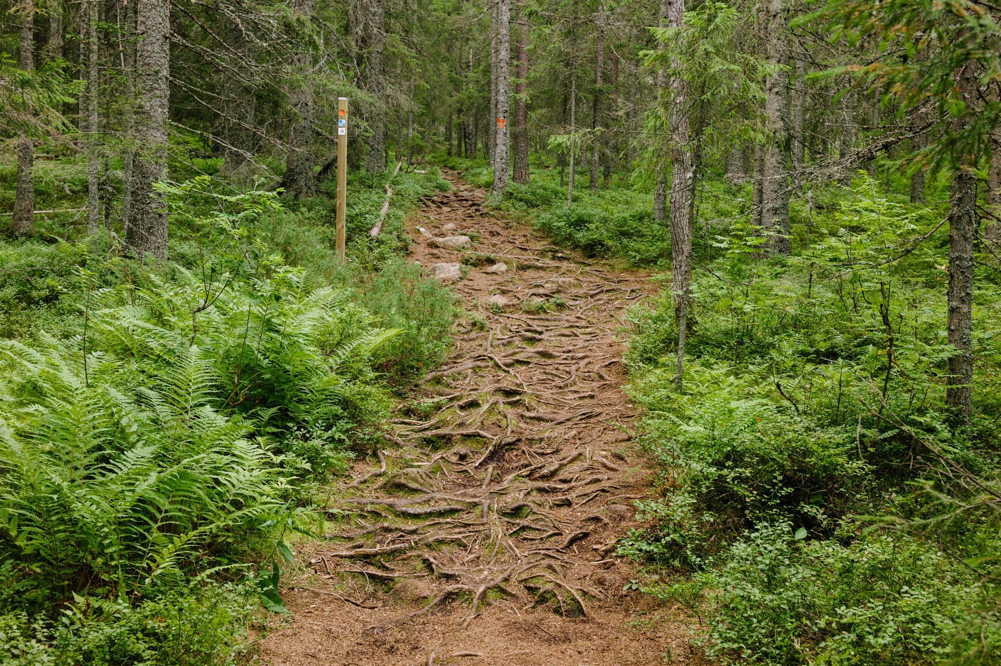 Sweden August 2015-203.jpg