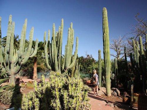 cactus-corner.jpg