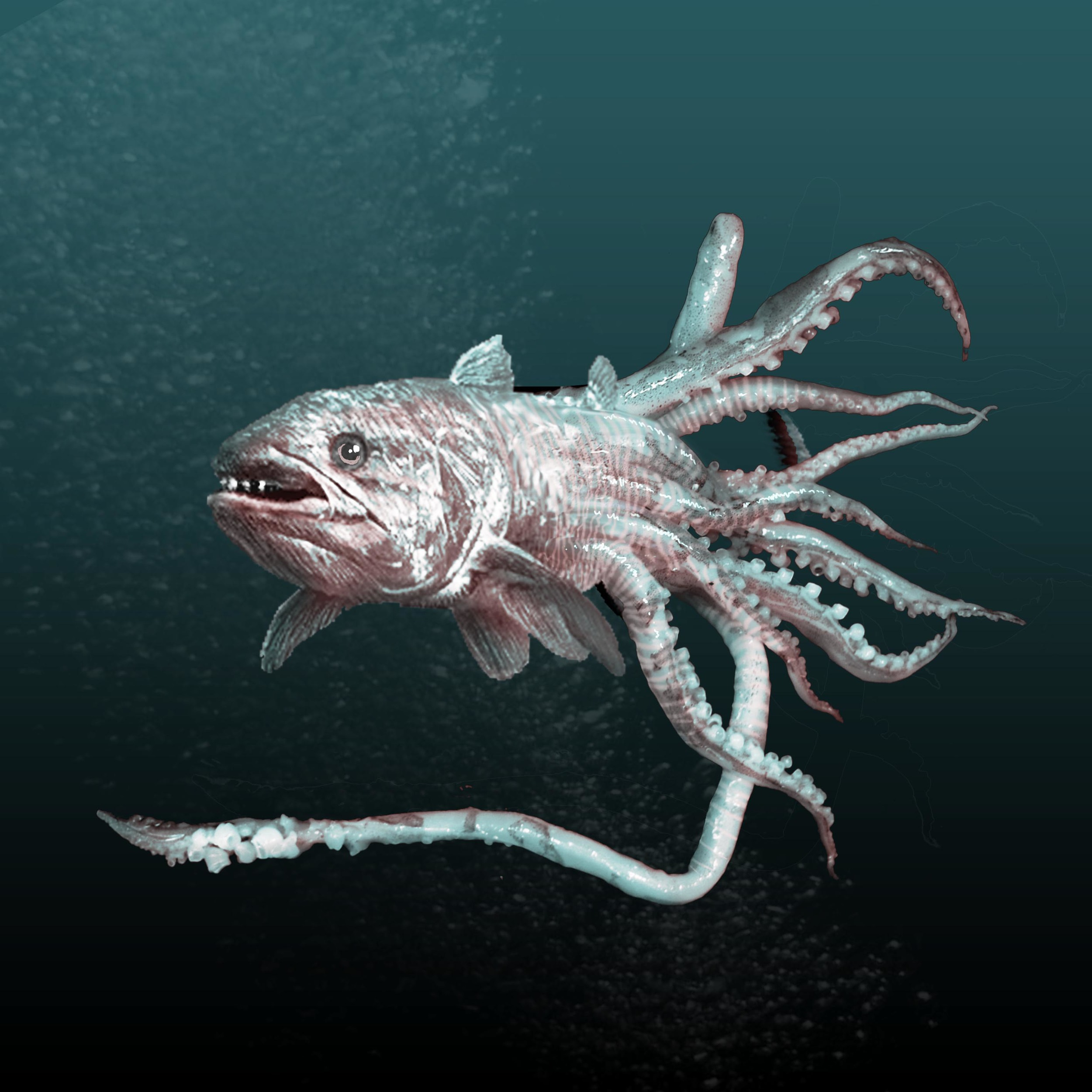 Cephalocanth.jpg