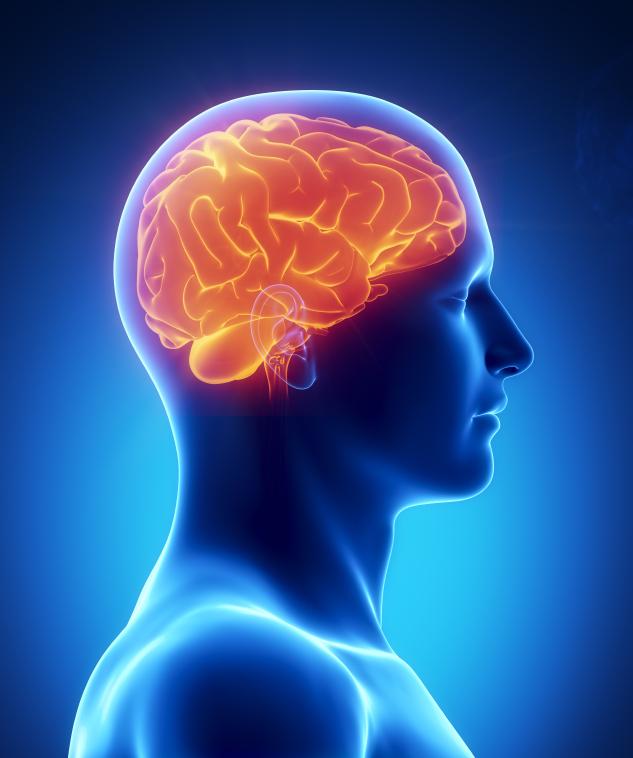 Adult Neuropsychology, St. Louis, MO