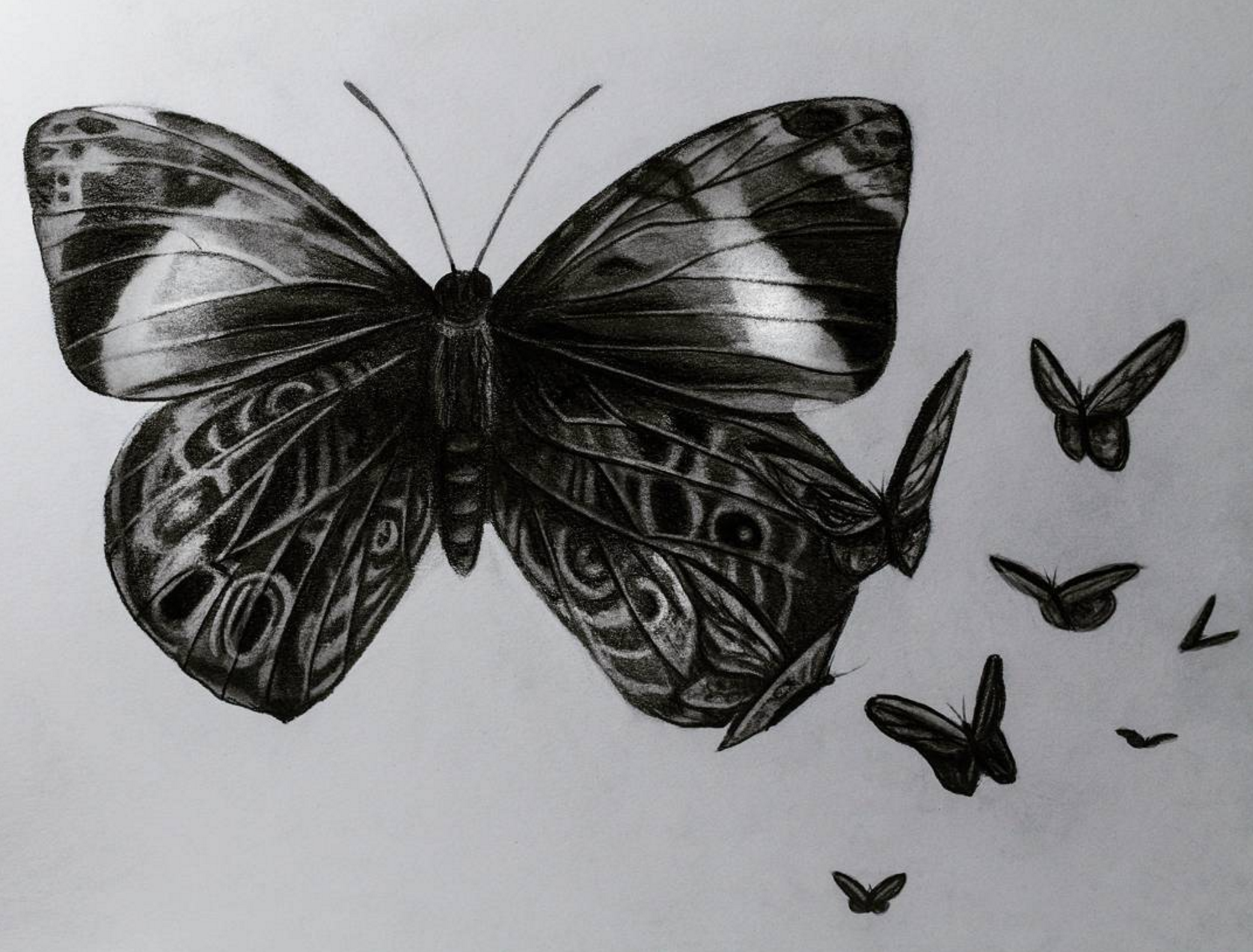 Butterfly design, 2017, graphite on paper, 9x12""