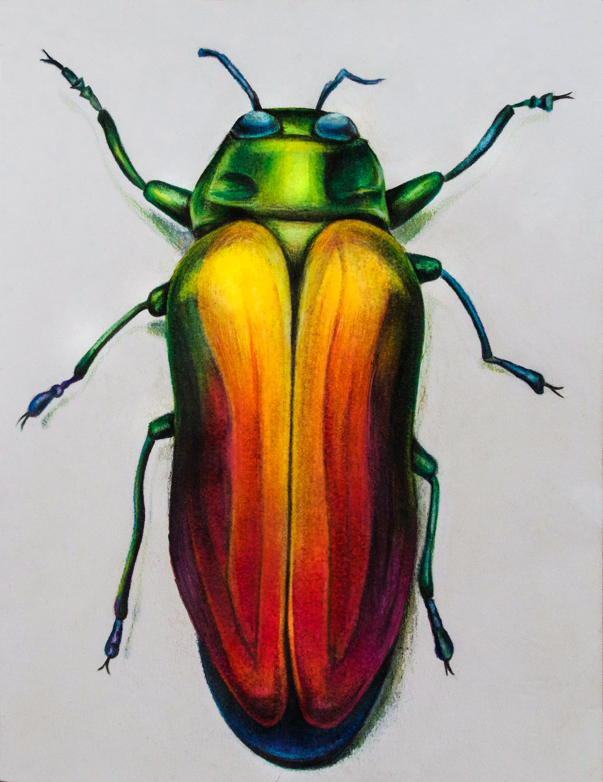 Rainbow Beetle, 2017, colored pencils on paper, 8.5x11""