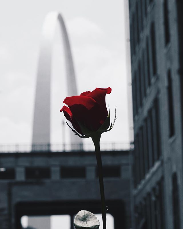 Come out to #Capacity3 this weekend to see this and three other rose themed pieces paying homage to some of my favorite spots in Saint Louis. I can't post them all but know They're some of my favorite pieces. Tickets are currently $7, link in my bio 🌹 I'm gonna have all kinds of prints so come out! One night only.