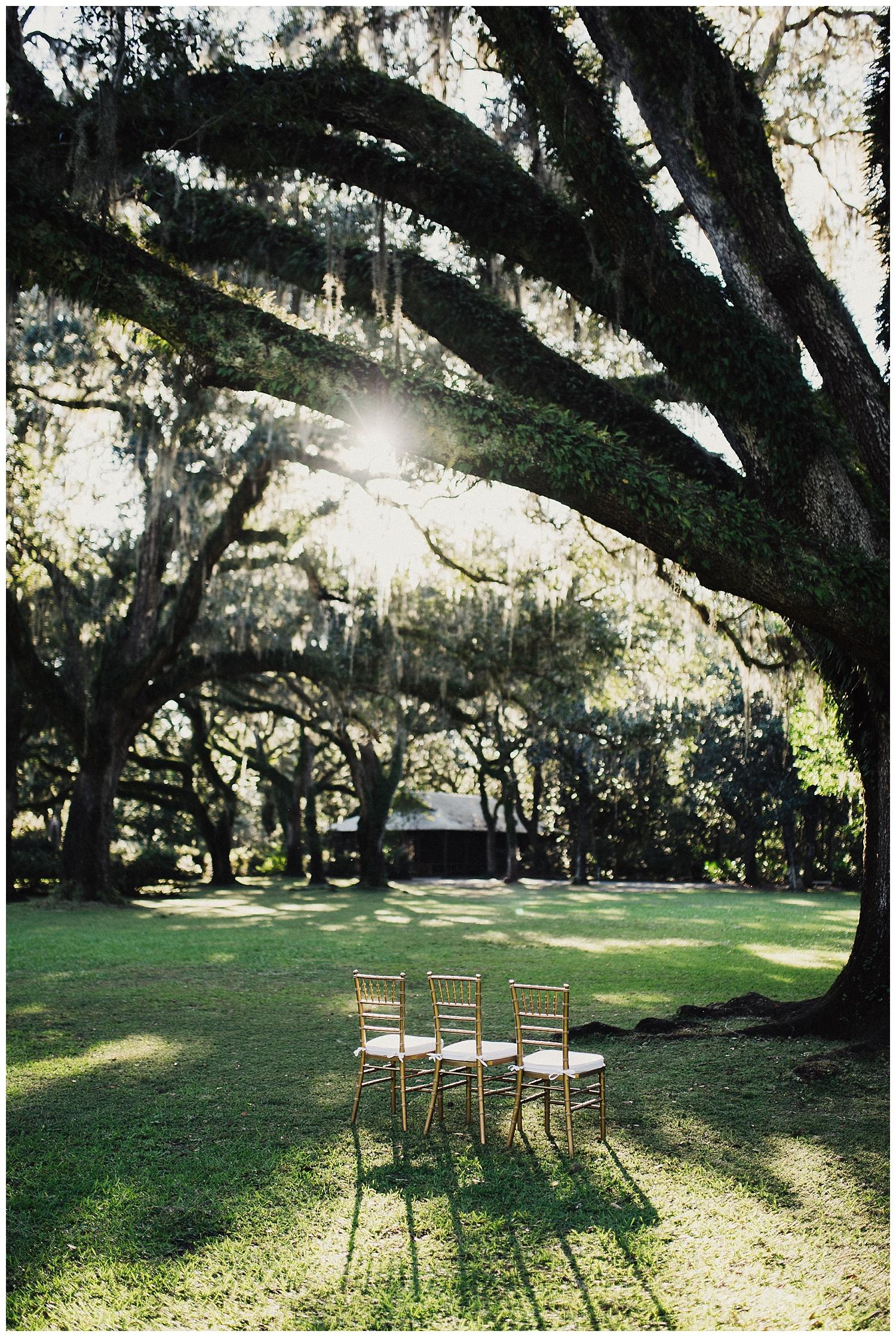 Spanish moss tree wedding