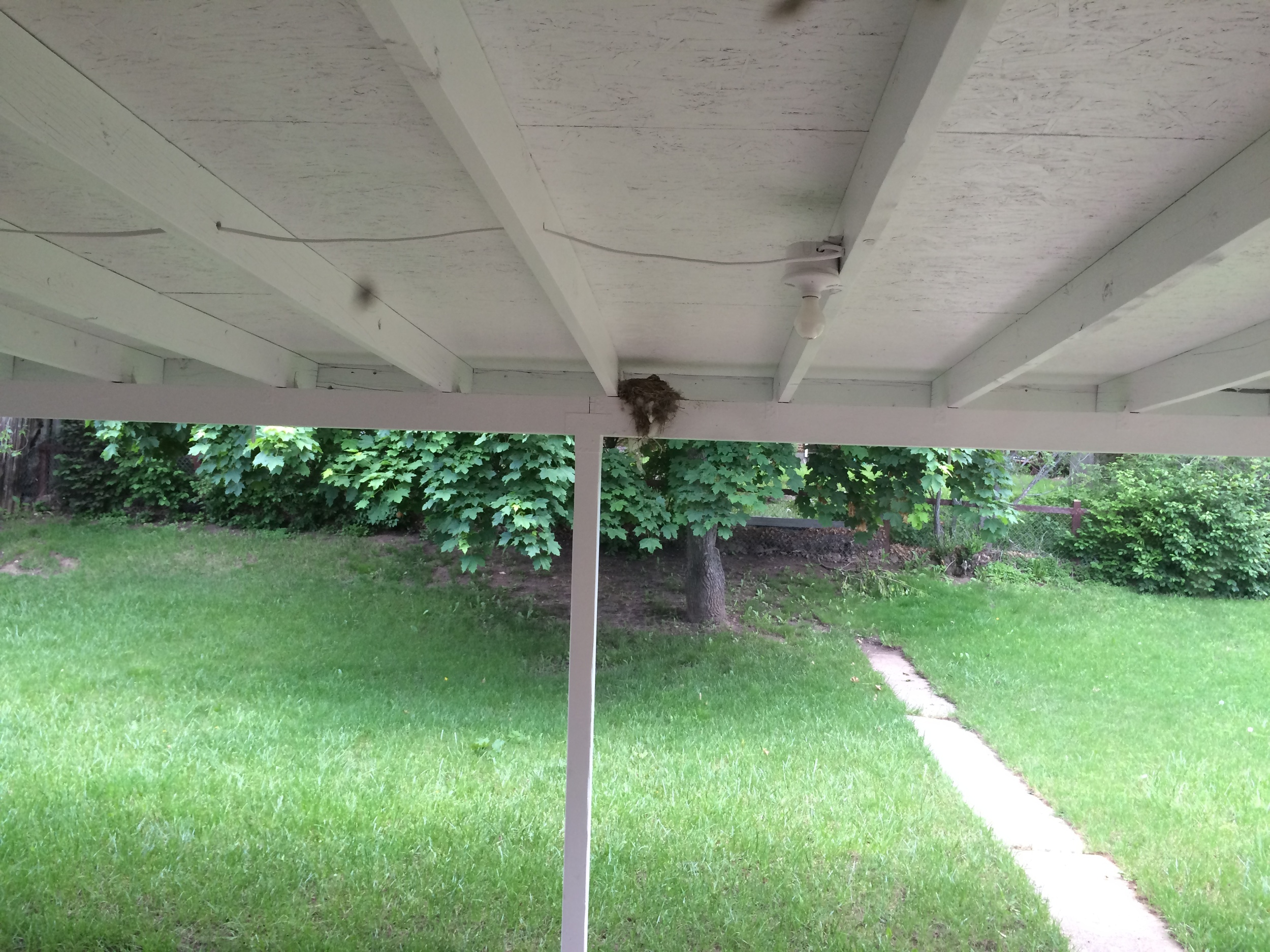 My new pet Robin babies, and a glimpse of where we'll have lots of summer fun :)