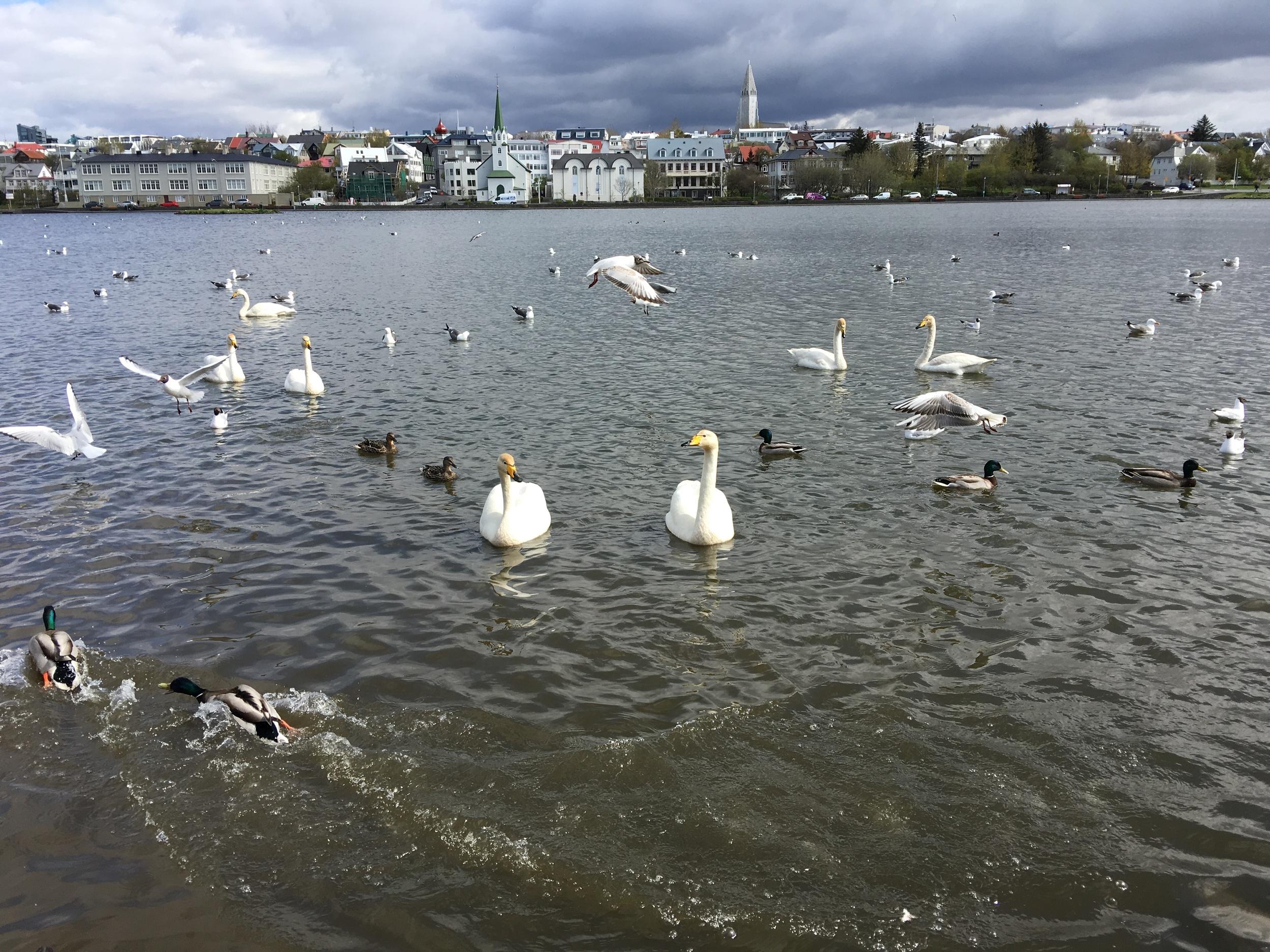 Feisty water birds