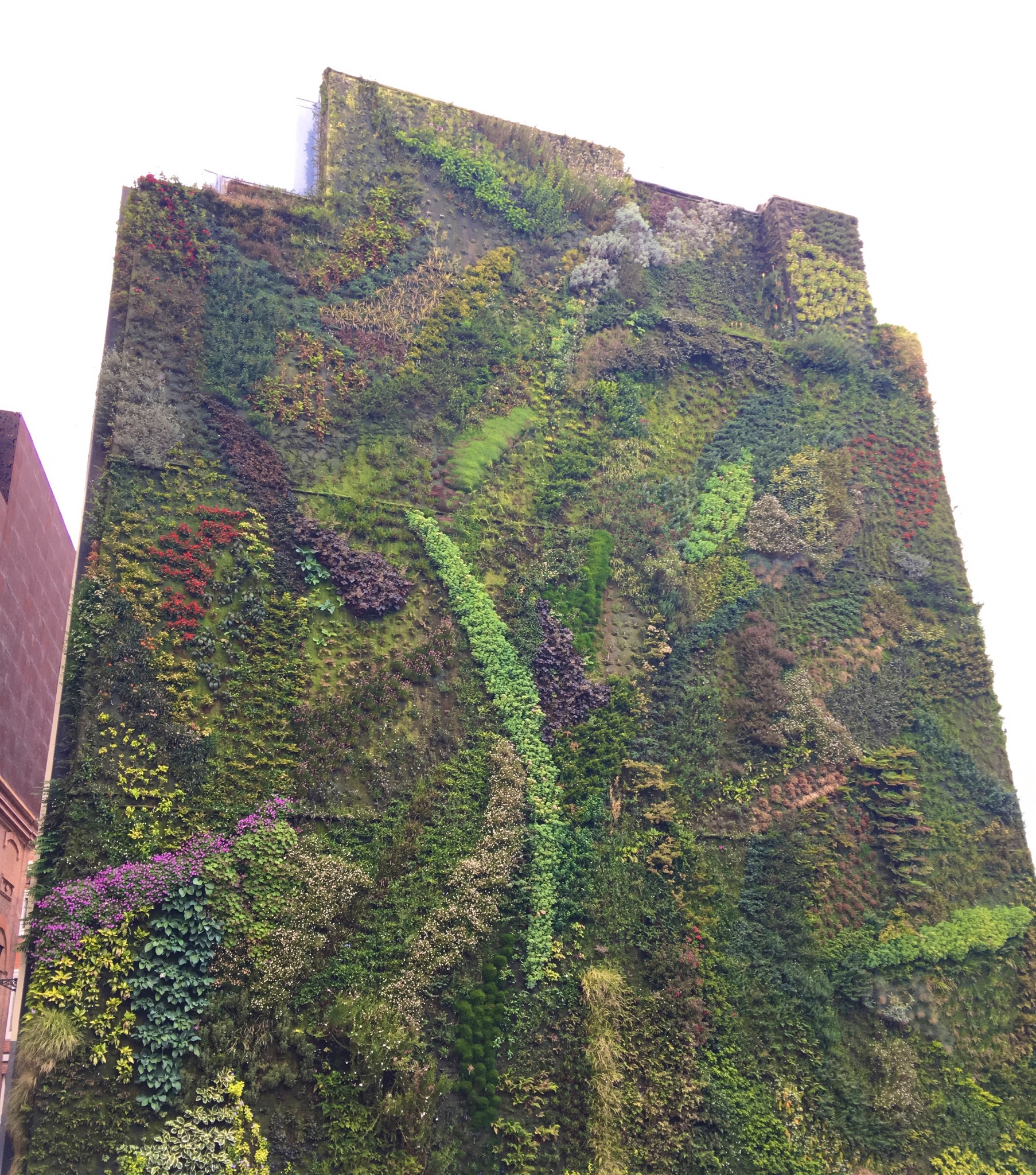 Plant wall near Atocha