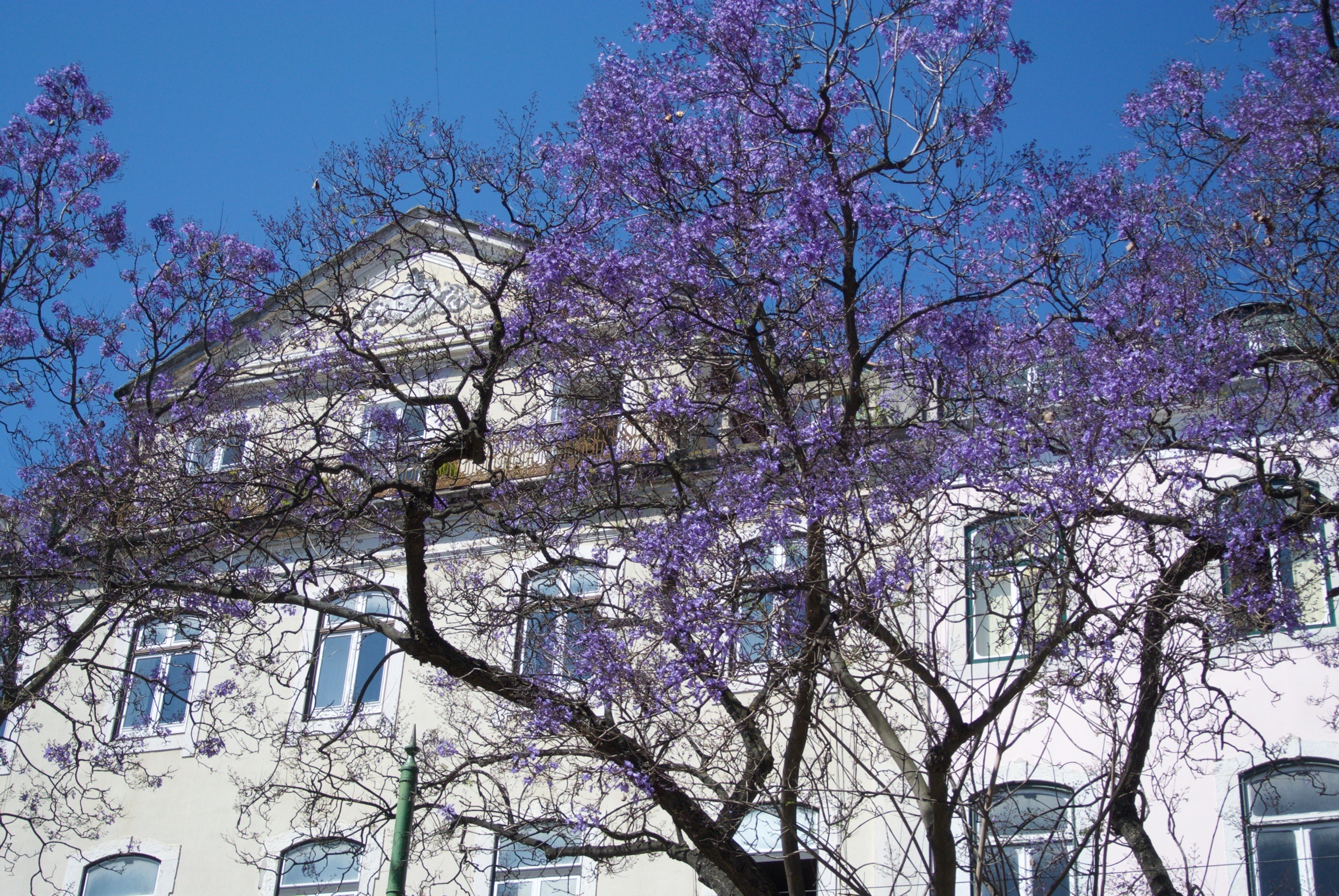 If you go in late May/June, the Jacaranda trees should be in bloom! They are a gorgeous purple, but their blossoms do make the street below sticky