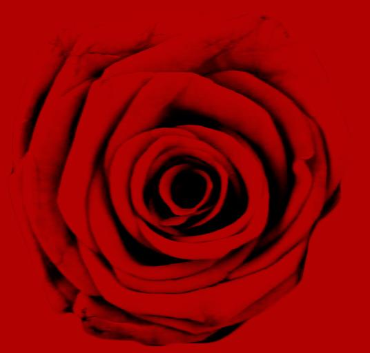 rosebud2.png