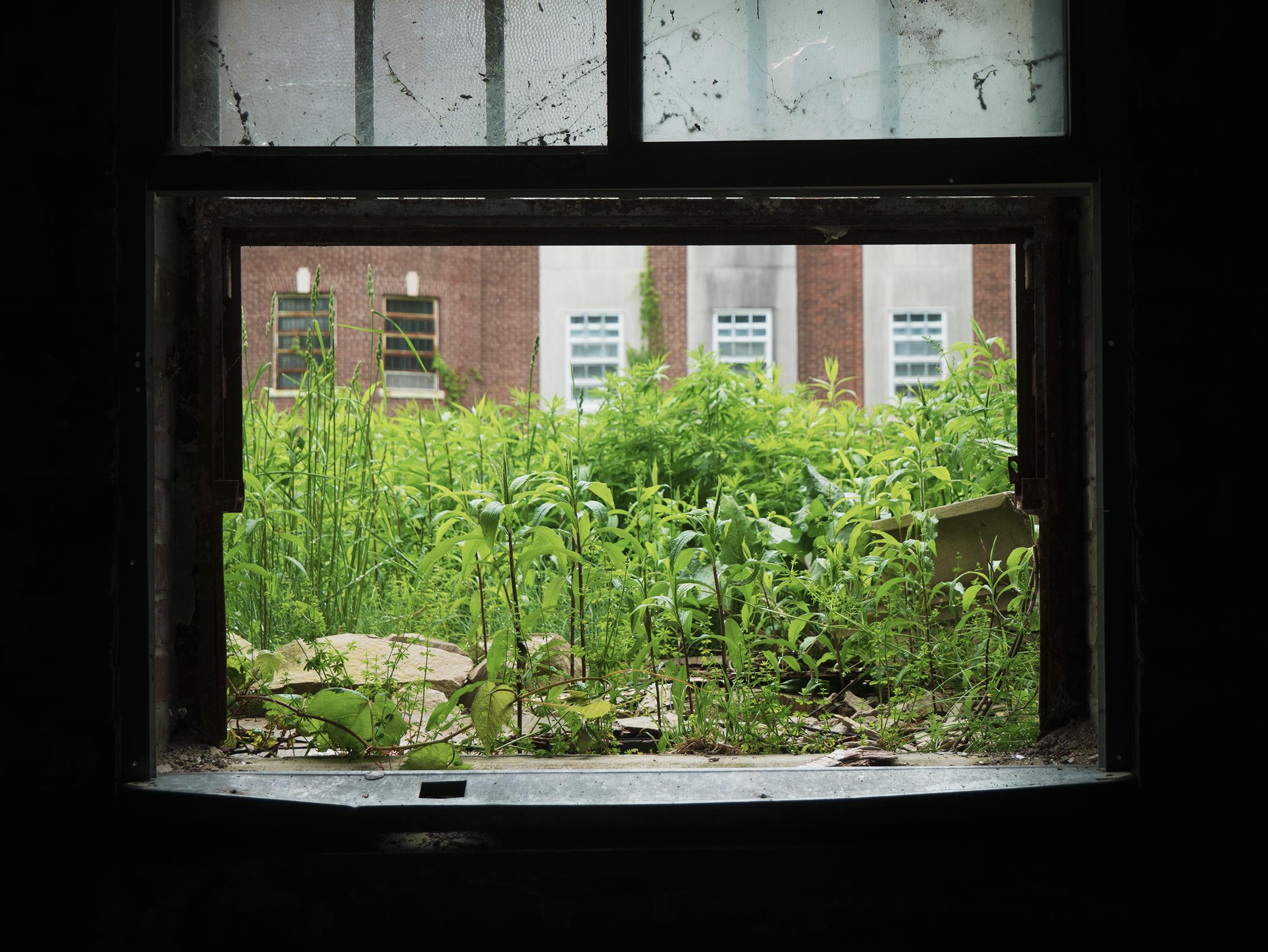grass window.png