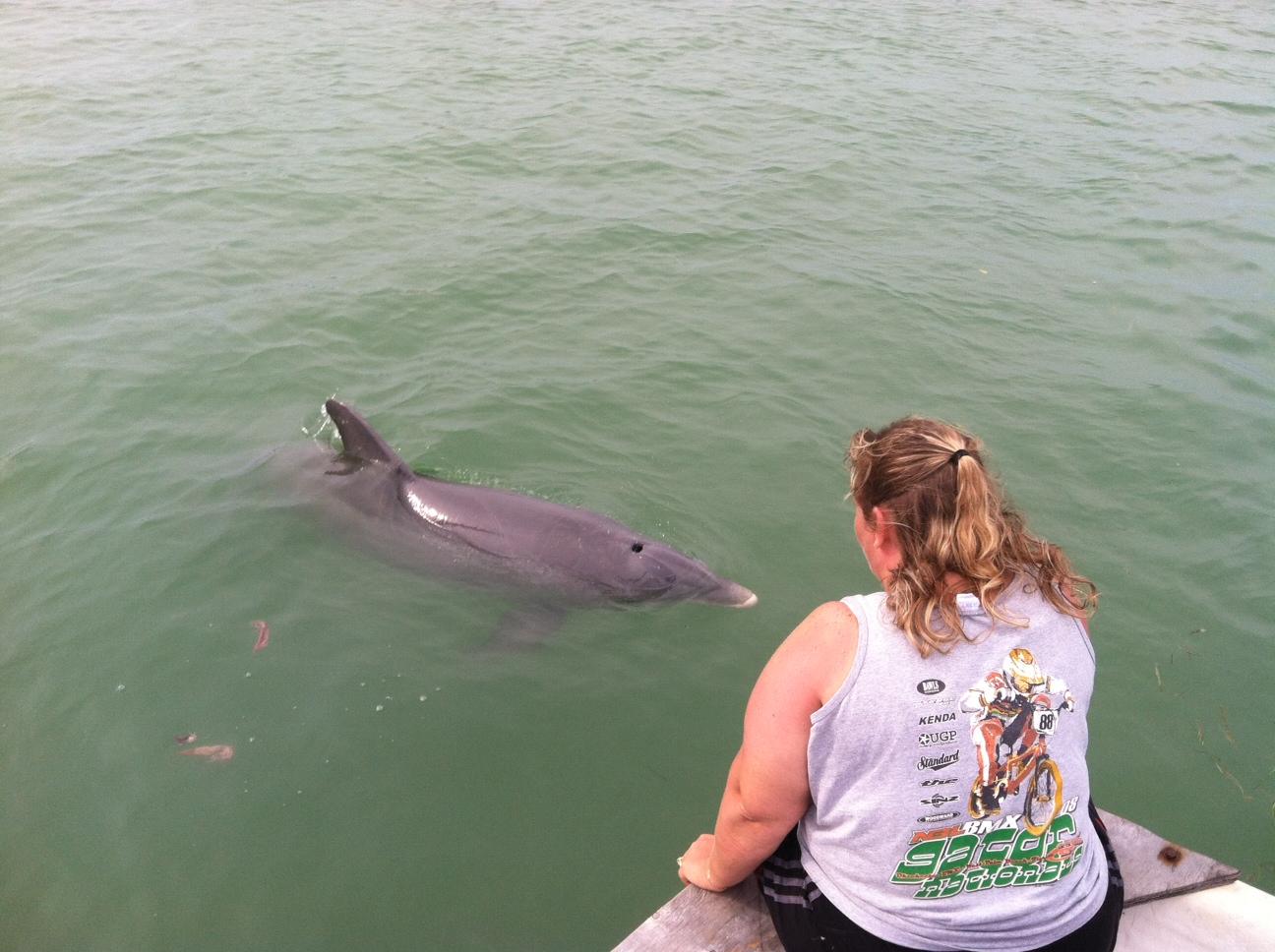 Dolphin 6.JPG