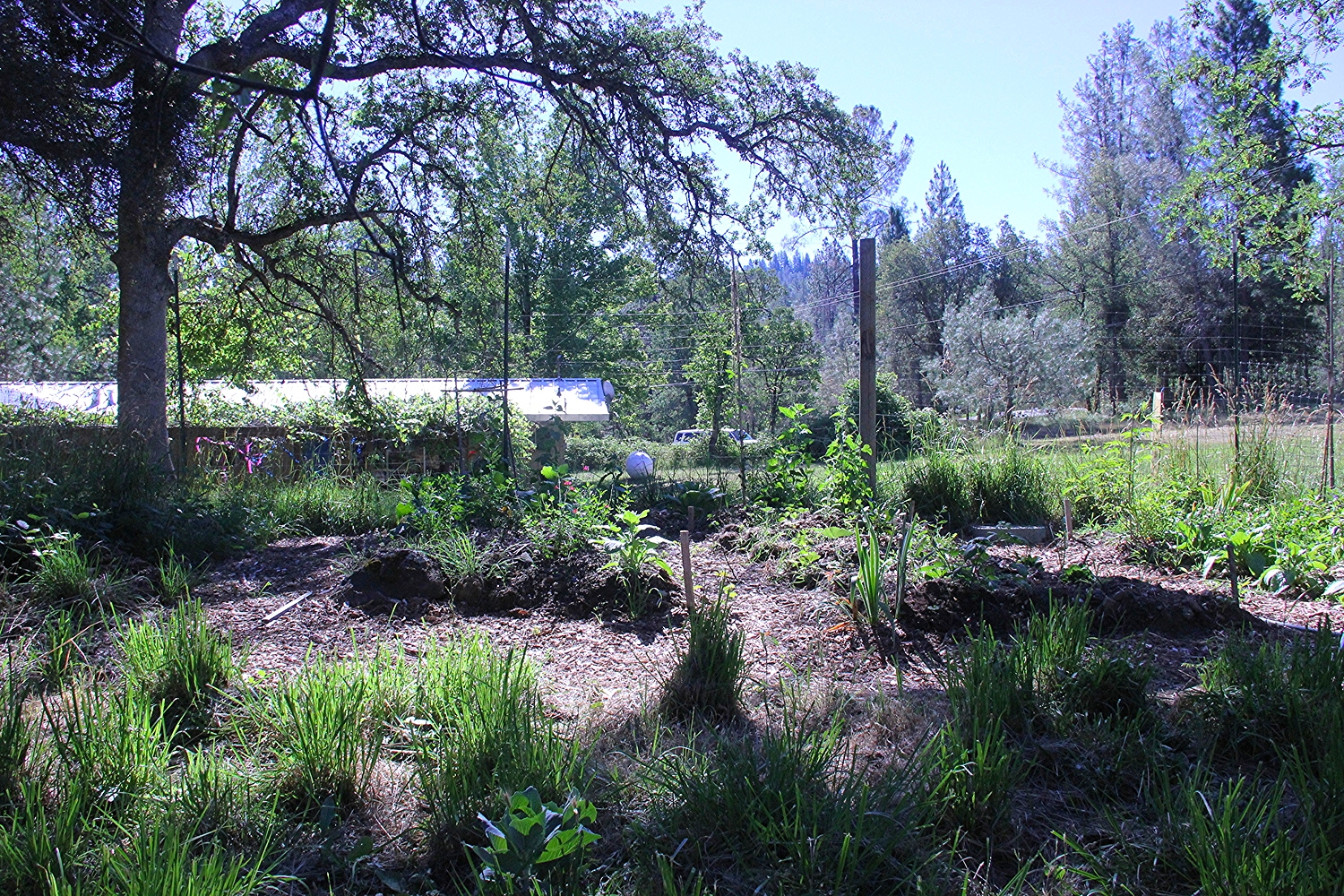 it was a challenge to find plants that thrived under the black oaks that we wanted to keep