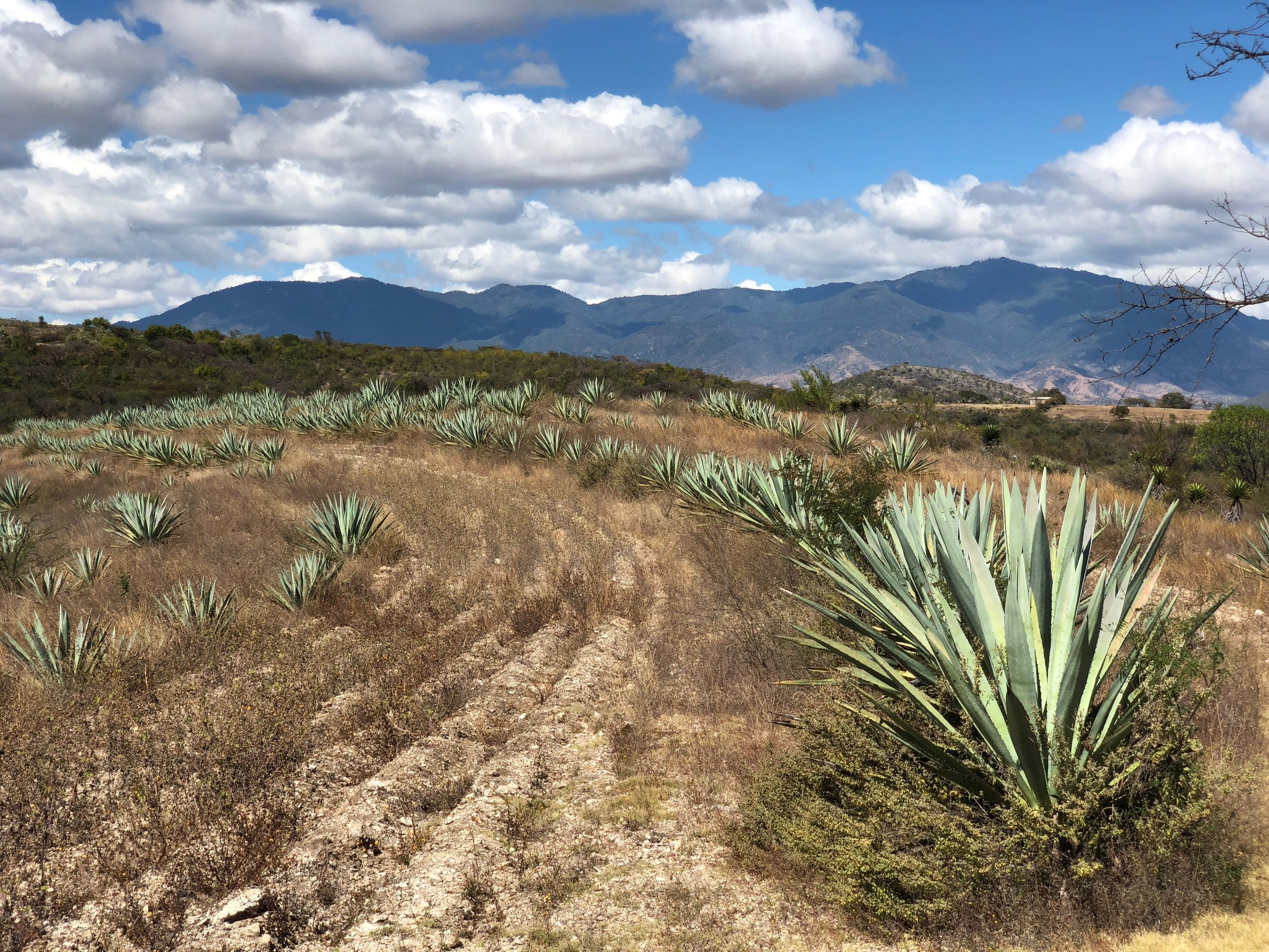Paquera Mezcal is produced in San Miguel Ejutla, a small Mexican town just outside Oaxaca.
