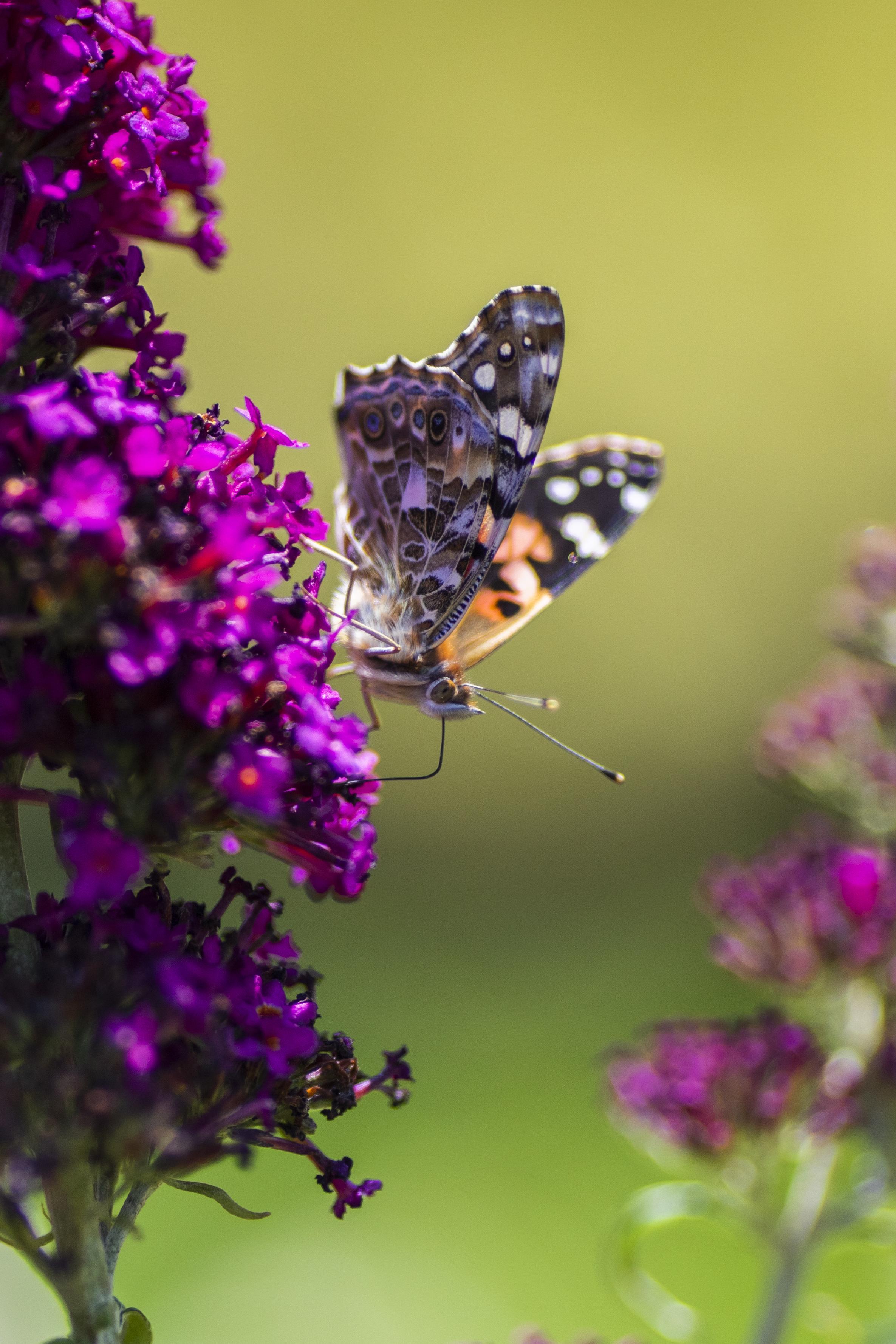 MM_Butterflies-1278.jpg