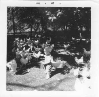 Little Daryl Bisanz feeding chickens, July 1965.