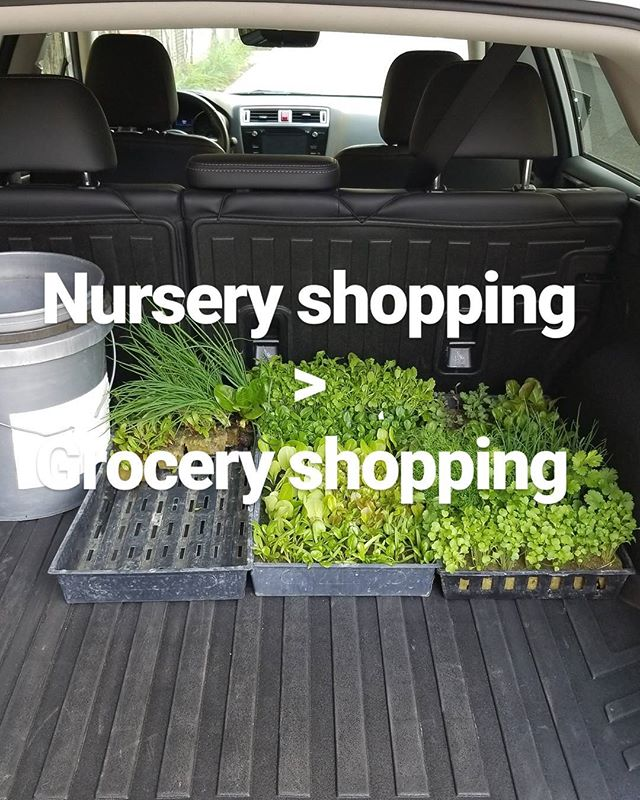Had to stock up on new plants....