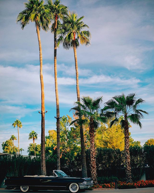 MAISON AZUR 🌷 🍌 🌼 🌊 🌈 #nature #palmtrees #summer #love #home