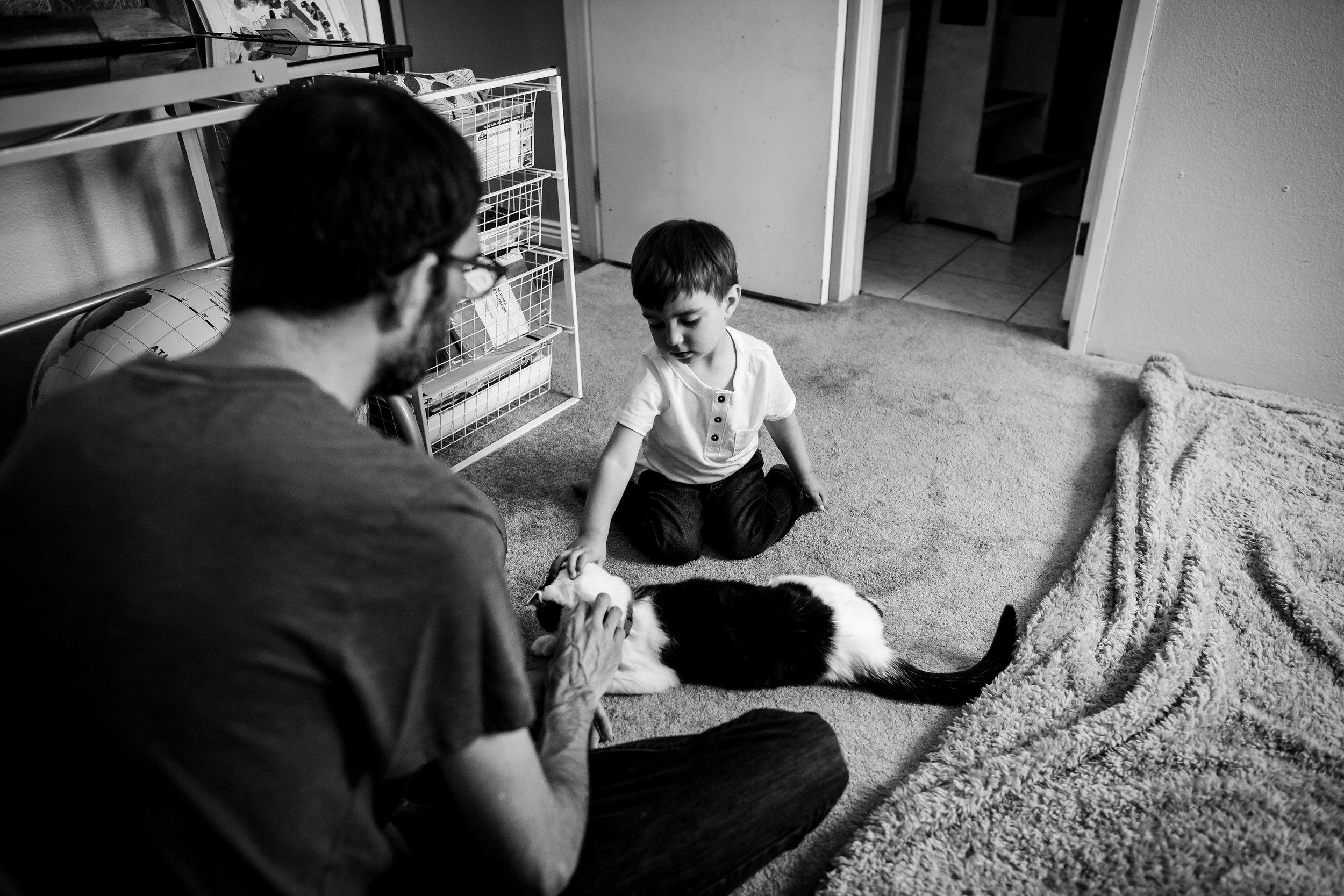 petting-cat-home-denver
