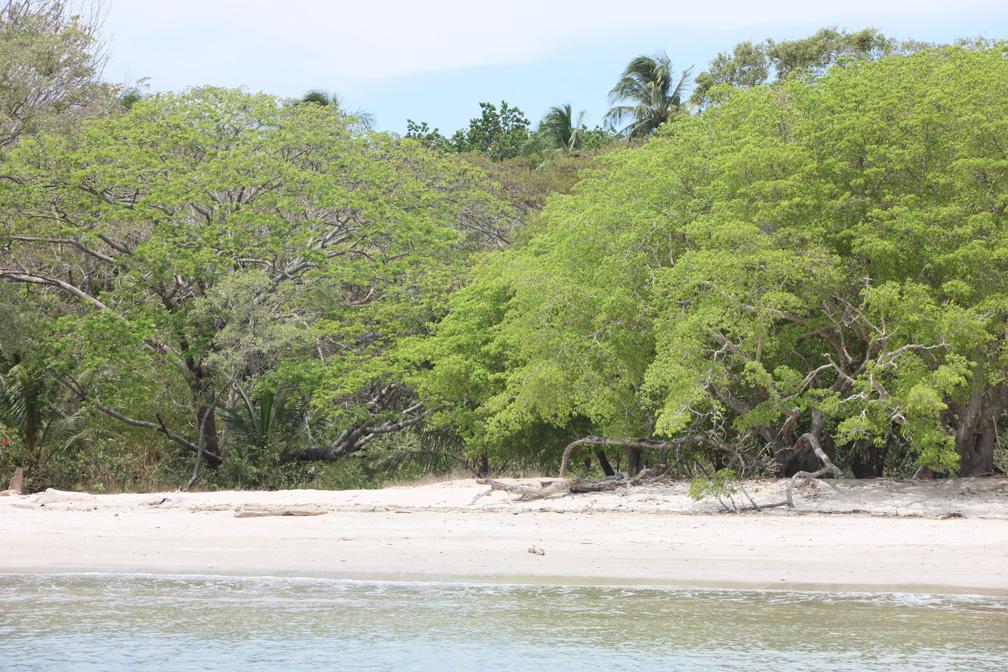 Whitesand_beach_gulf.jpg