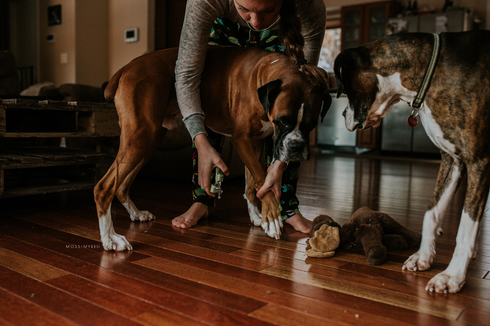 woman trimming boxer dog's nails