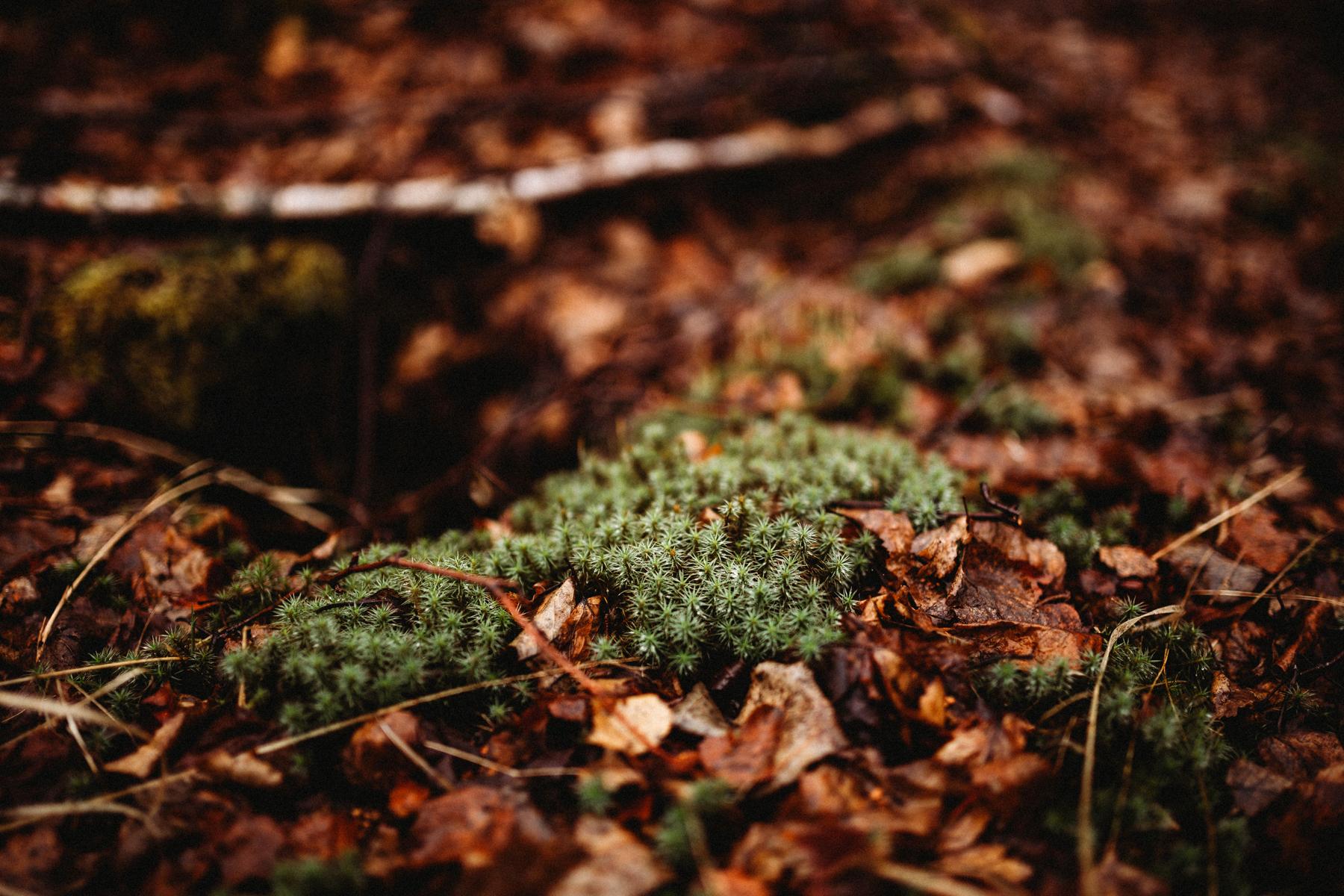 ashandfernforest10_1.jpg