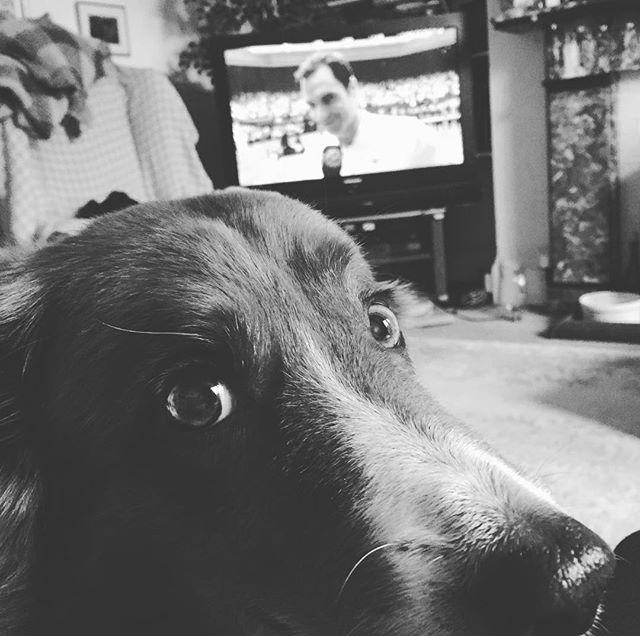 Watching Wimbledon 🏆🏆🏆 #Federer #finals #tennis #wimbledon #superyachtdog #toocute #puppylove #superyachtvetservice #pettravelsupport #takeyourdog #partofthefamily #cruisewithdogs #dogonboard #mansbestfriend #collie #colliesofinstagram #uksummer #champion #winner #yachtdog #boatdog #seadog #pettravel #petadventure #superyacht #megayacht #superyachtvet #thatface #distraction