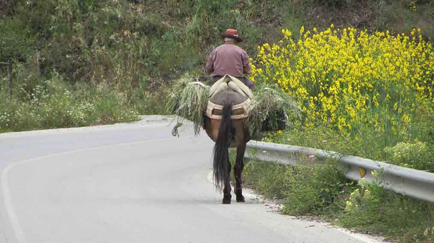 Its not the way we usually travel -this is just one of those sights you are likely to see on our Andalucía East tour -  here travel happens at an entirely different pace - relax and let us do all the work!