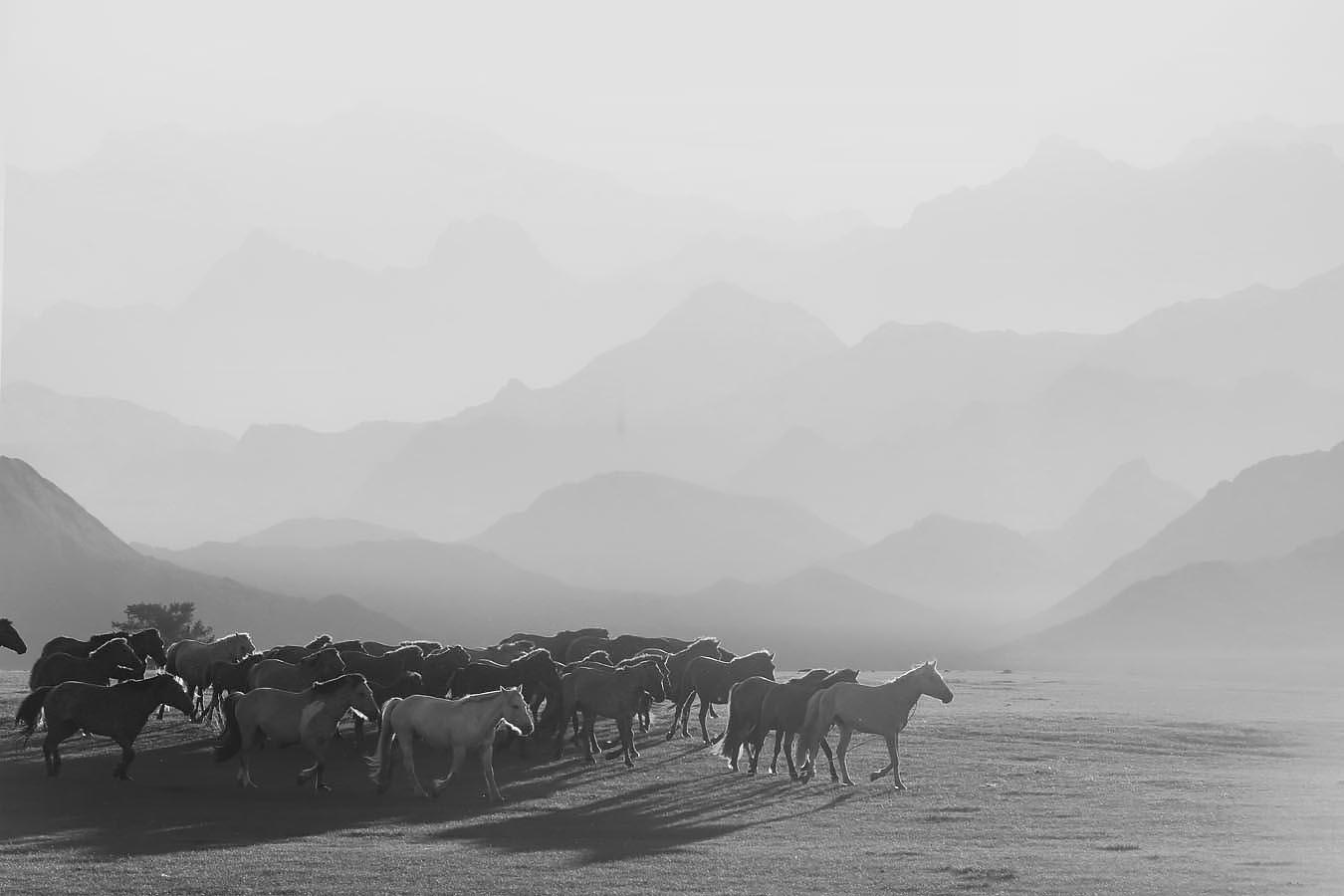 mongolias.jpg