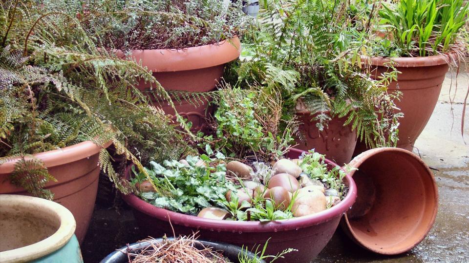 music-career-gardening