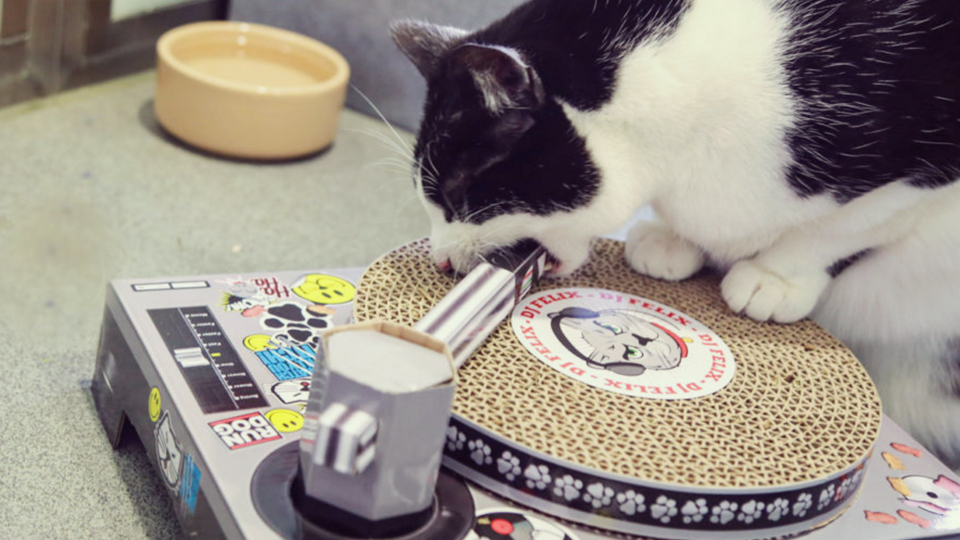 apr27-cats-scratching-records