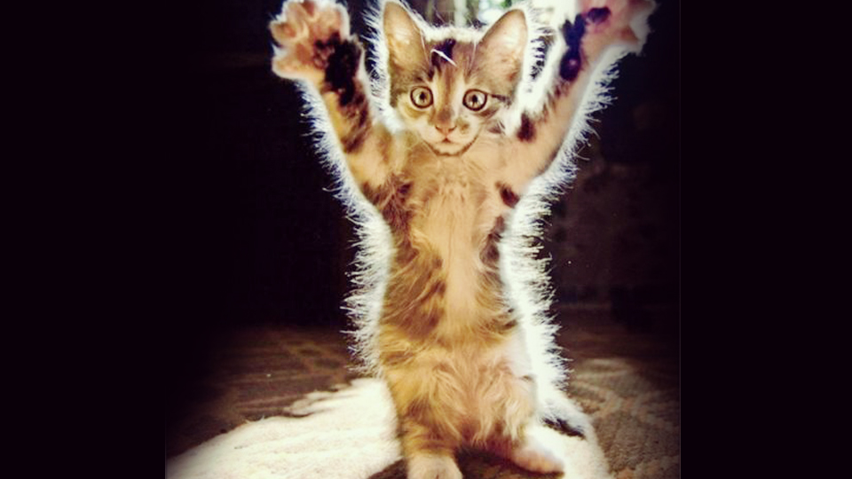 may27-paws-up-for-cats-in-clubs-1