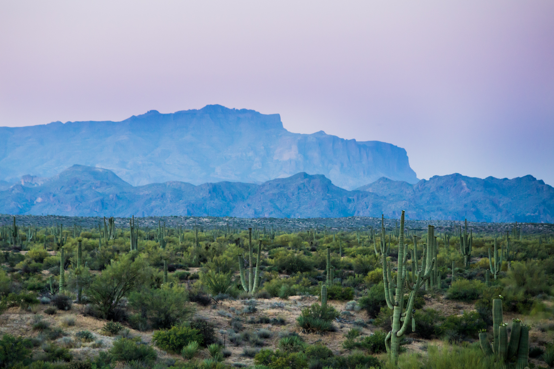 AVCalla-Beeline Desert-1.jpg
