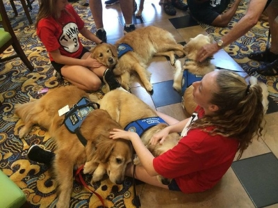 Orlando Emotional Support Dogs - Unconditional Love Beings