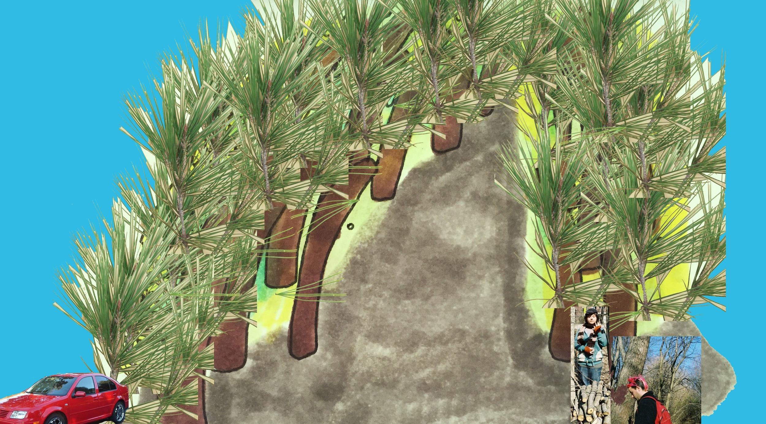 Pitch pine @ Pine Grove Preserve