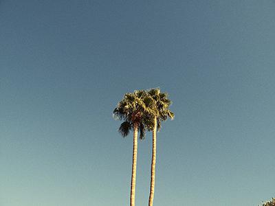 PSP-Palmtree.jpg