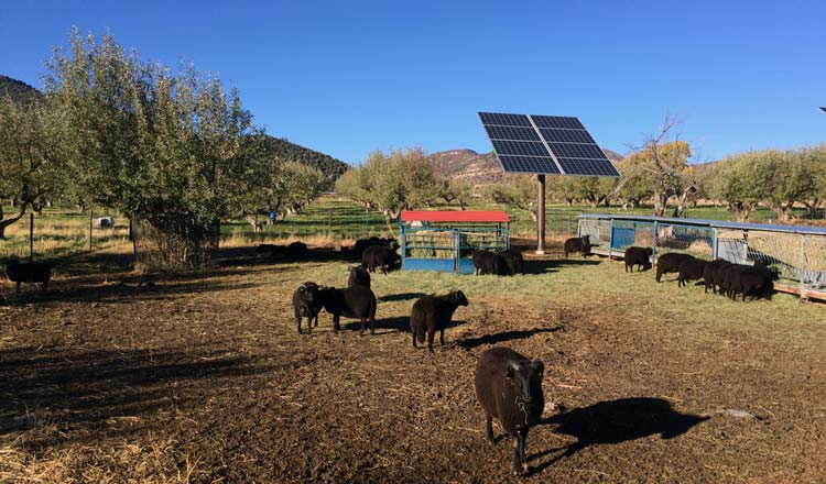 Desert Weyr Farm, Colorado