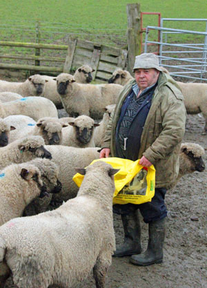 Clive Pugh with his Shropshire ewes