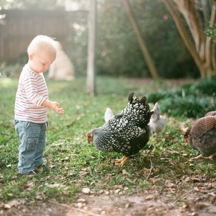 katherineholly backyardchickens1.jpg