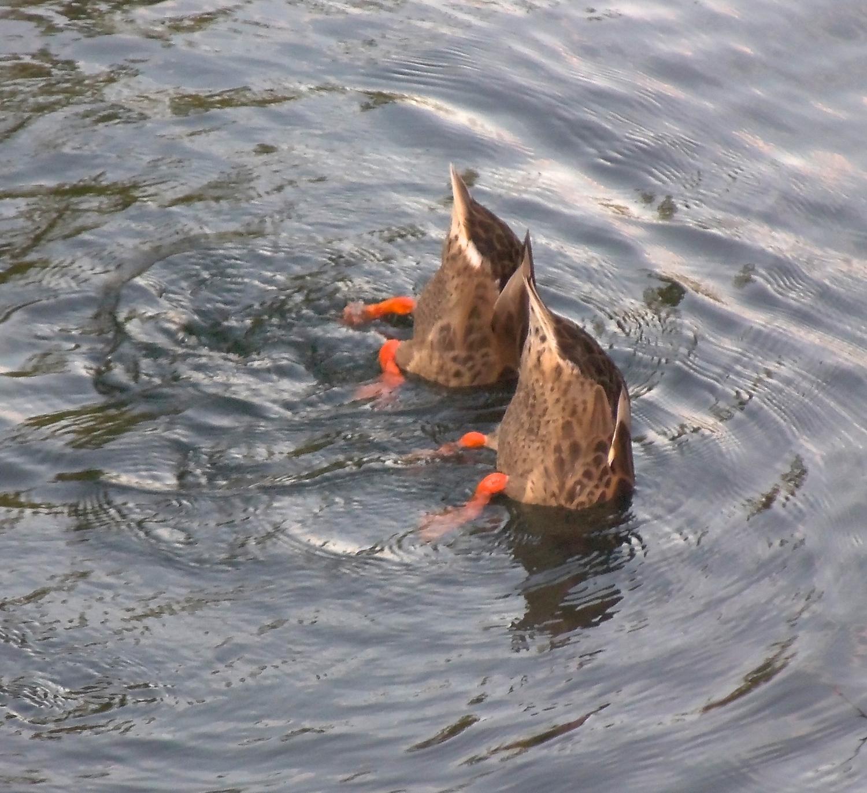 Ducking the Heat