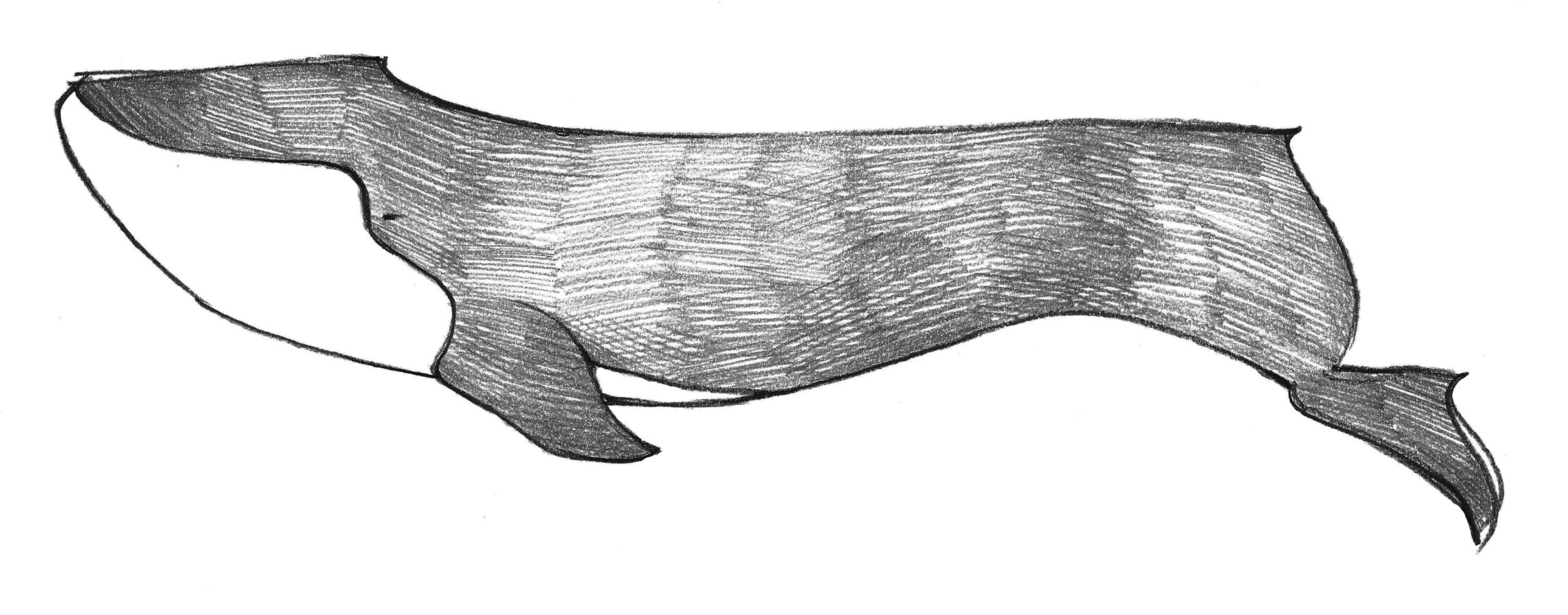 Kelly Lee Design Blog quick doodle blue whale sketch