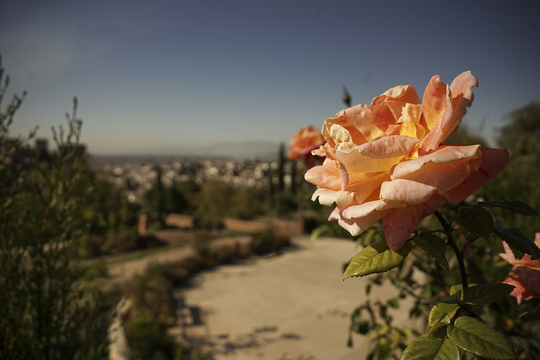Granada_0017.jpg